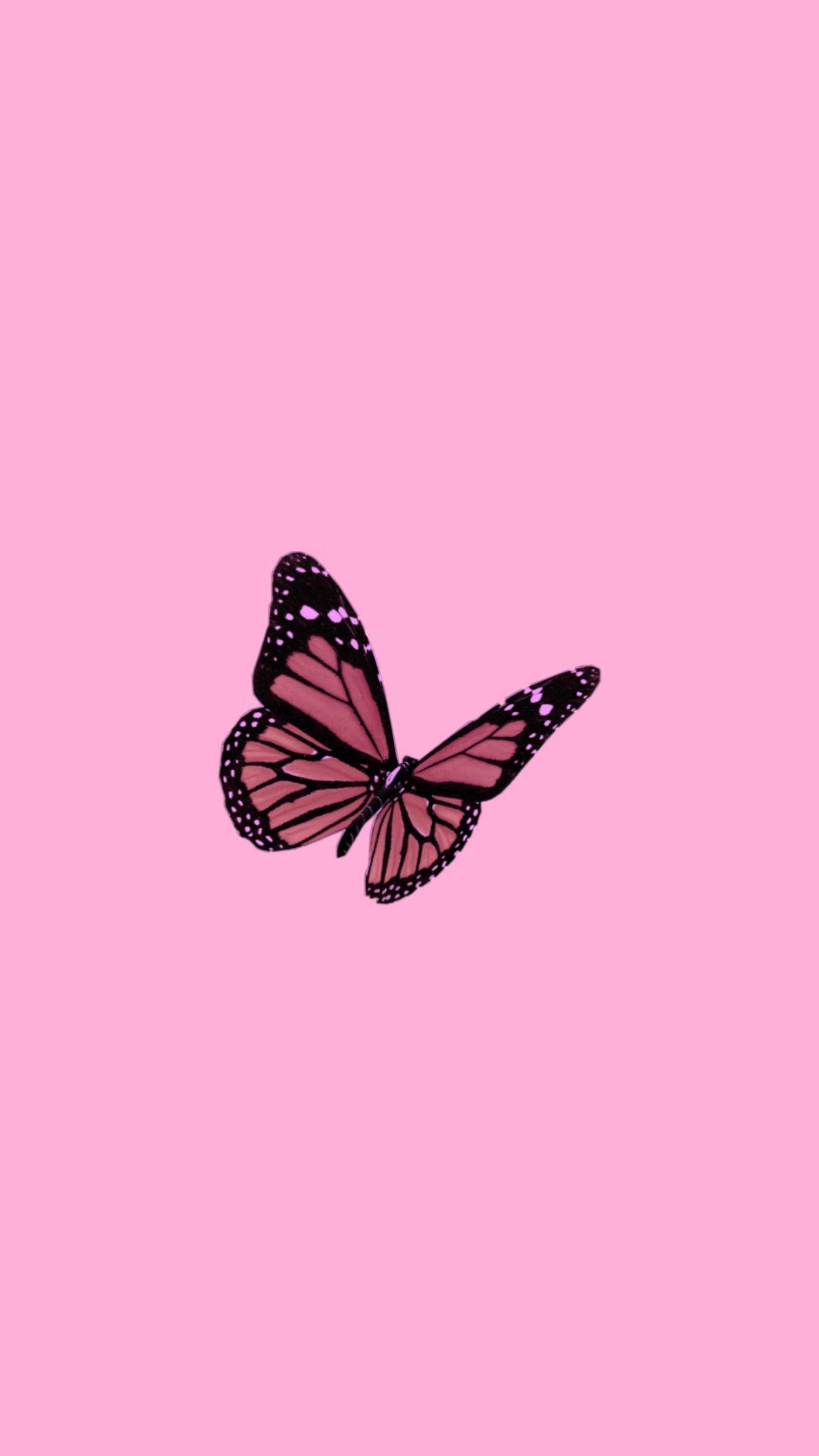 Vsco Butterfly Wallpapers Top Free Vsco Butterfly Backgrounds