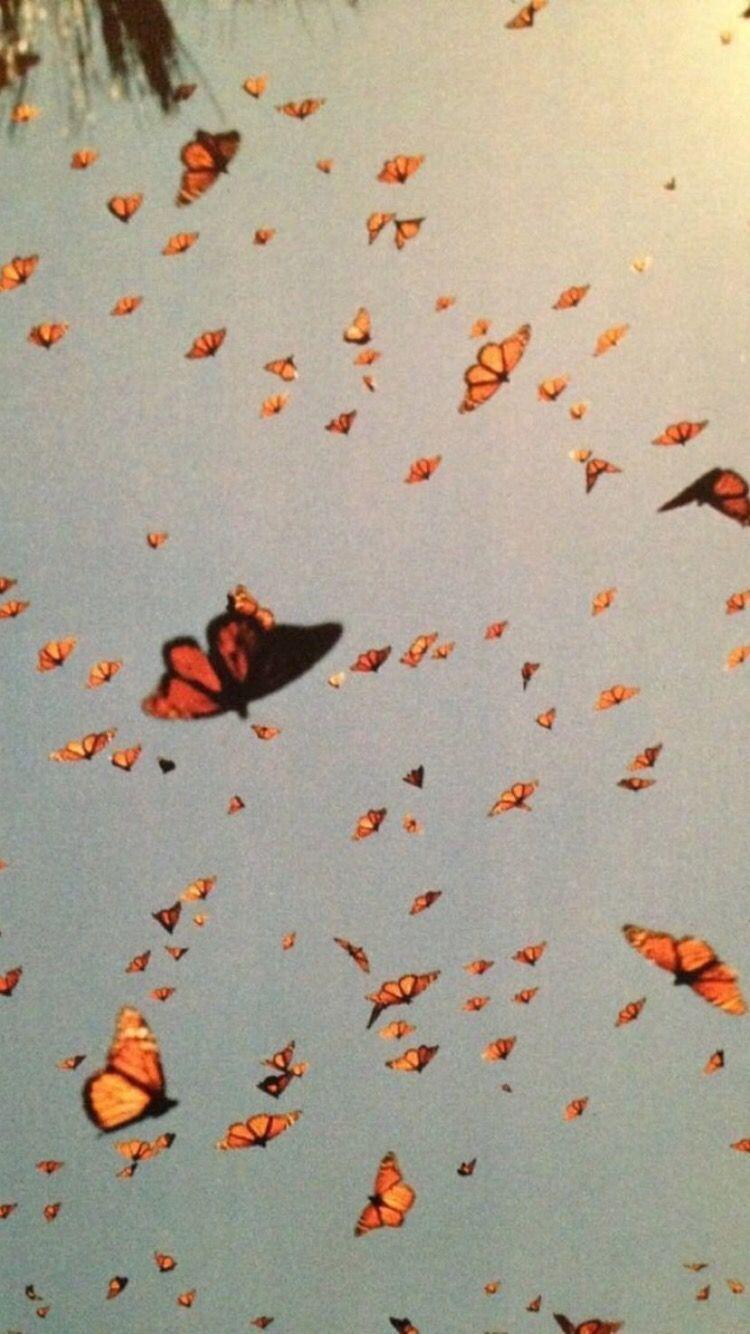 Vsco Butterfly Wallpapers Top Free Vsco Butterfly Backgrounds Wallpaperaccess