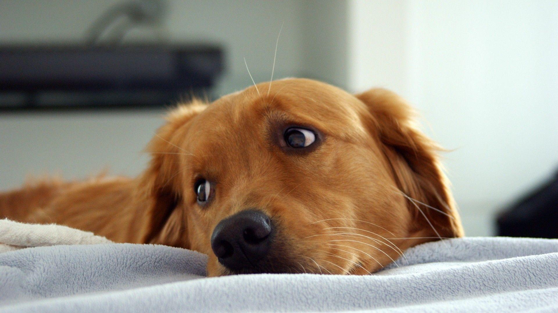 Hình nền con chó HD miễn phí 1920x1080