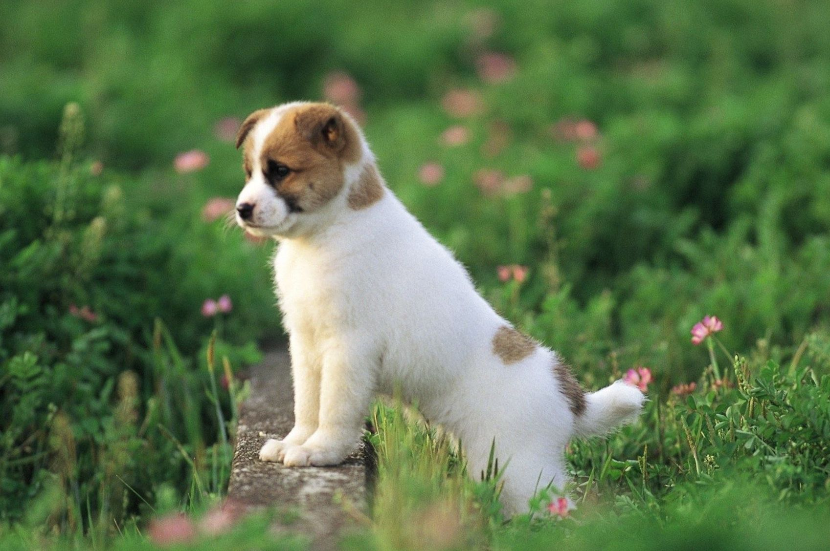 Cute Dog Wallpapers Top Free Cute Dog Backgrounds Wallpaperaccess