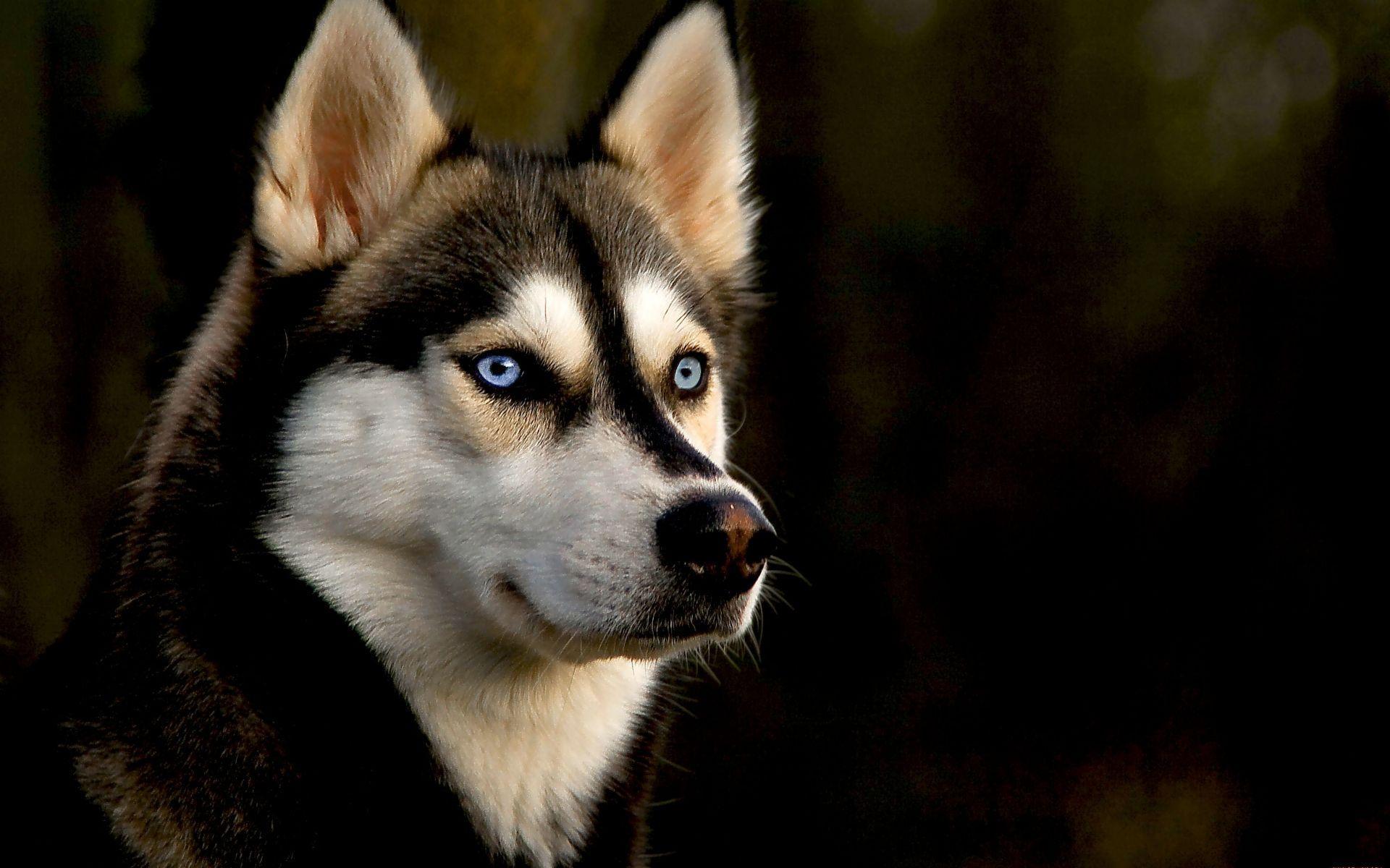 Hình nền chó 1920x1200, Hình nền chó Full HQ Định nghĩa chất lượng Lưu trữ YW