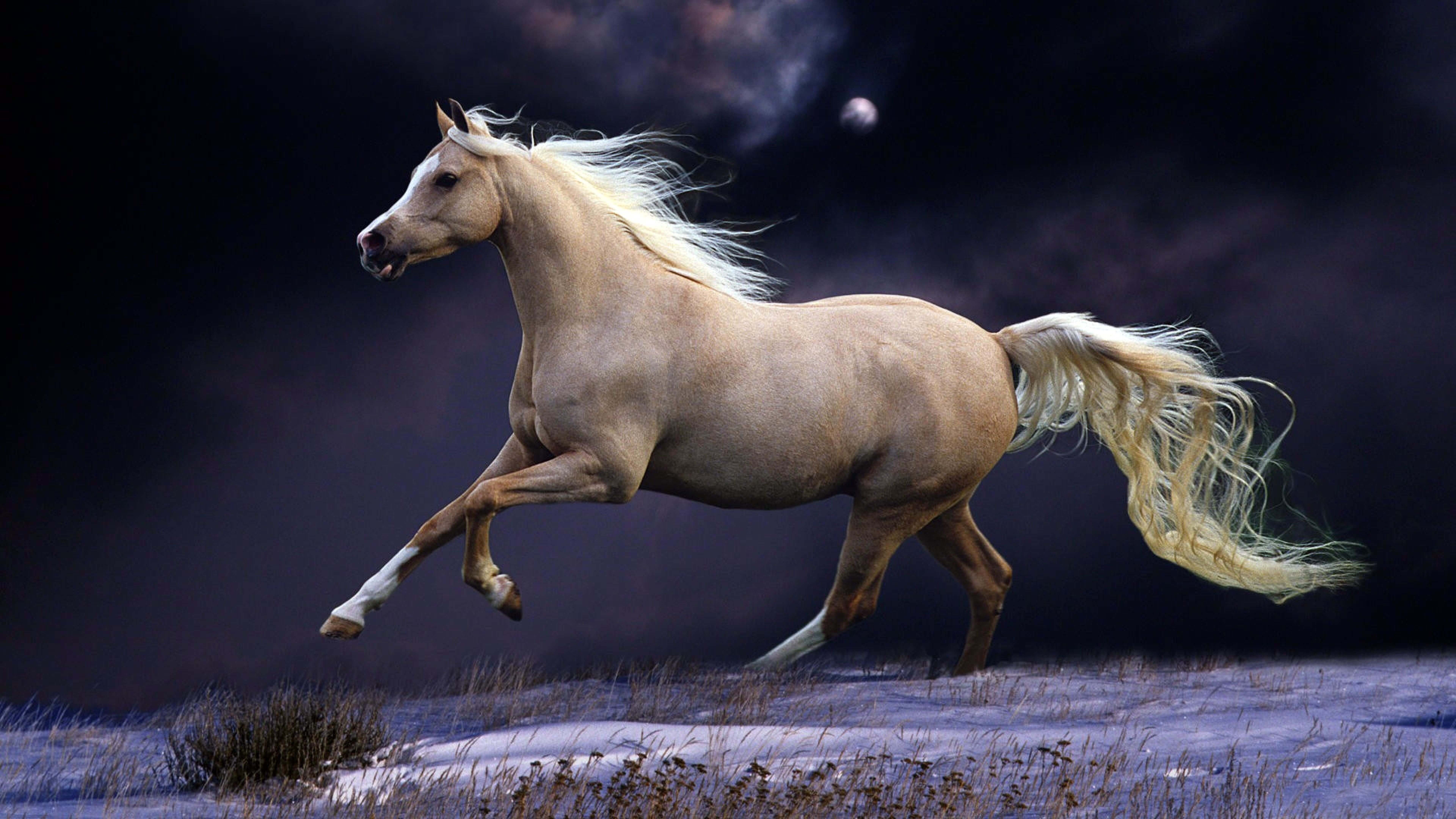 Horse 4k Wallpapers Top Free Horse 4k Backgrounds Wallpaperaccess