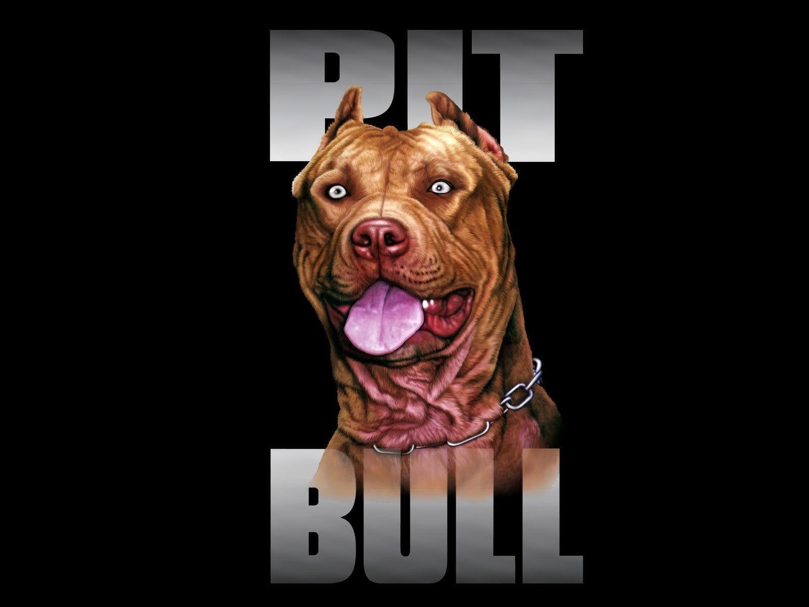 Pitbull Wallpapers Top Free Pitbull Backgrounds Wallpaperaccess