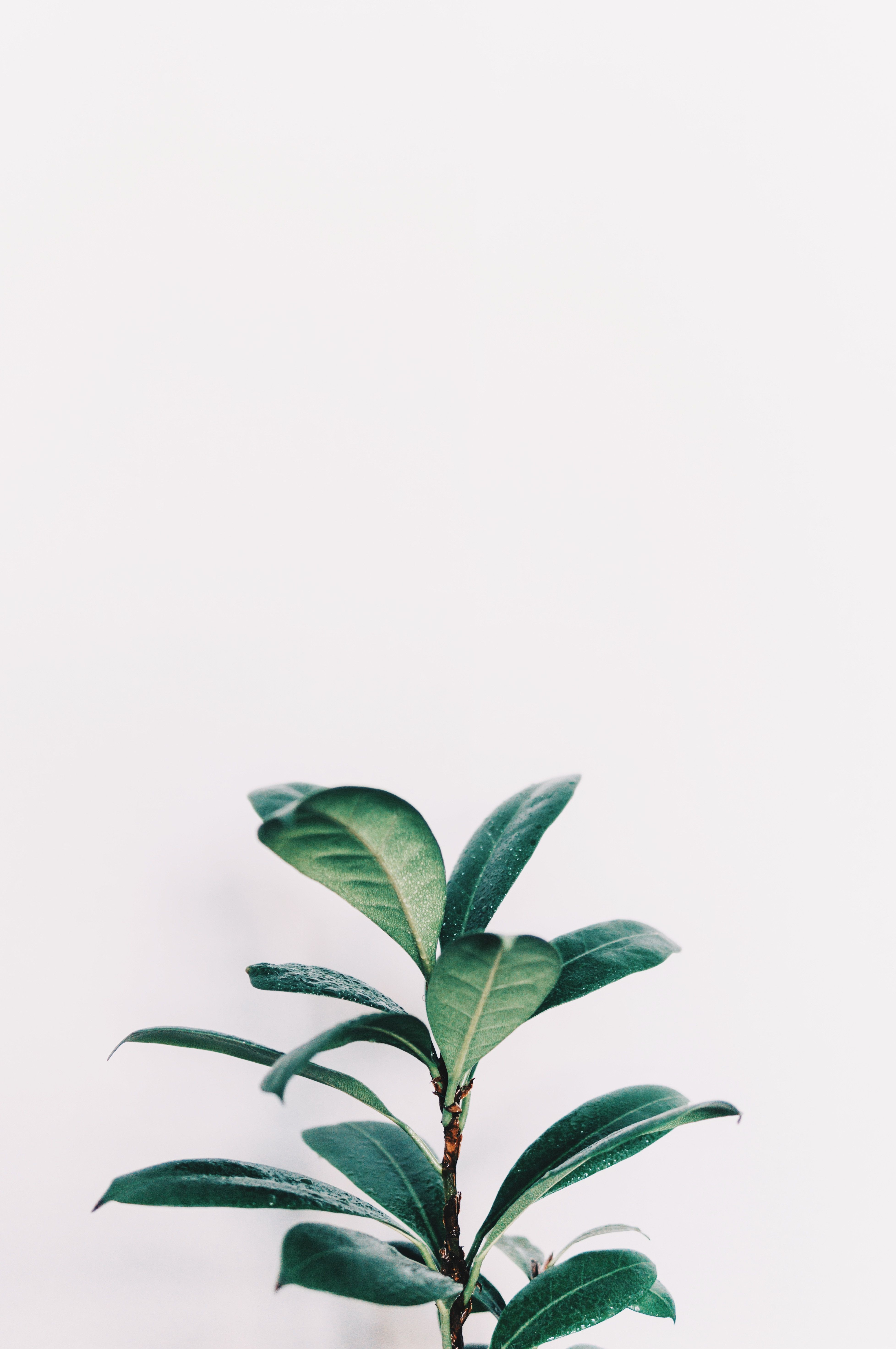 Plant Aesthetic Iphone Wallpapers Top Free Plant Aesthetic Iphone Backgrounds Wallpaperaccess