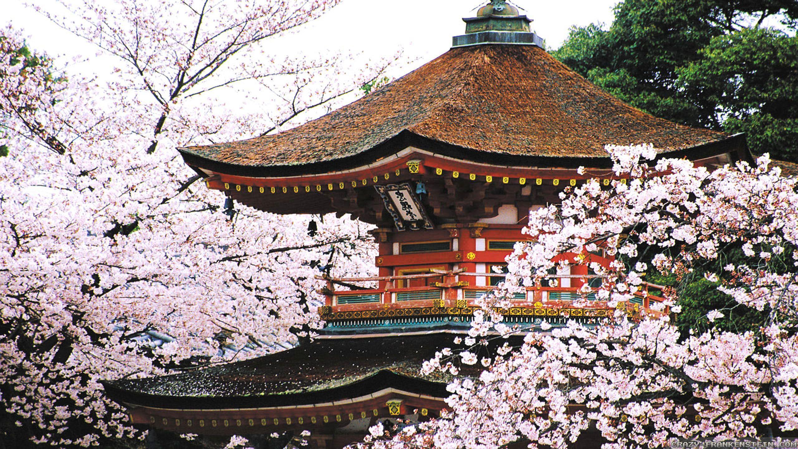 Kyoto Cherry Blossom Desktop Wallpapers