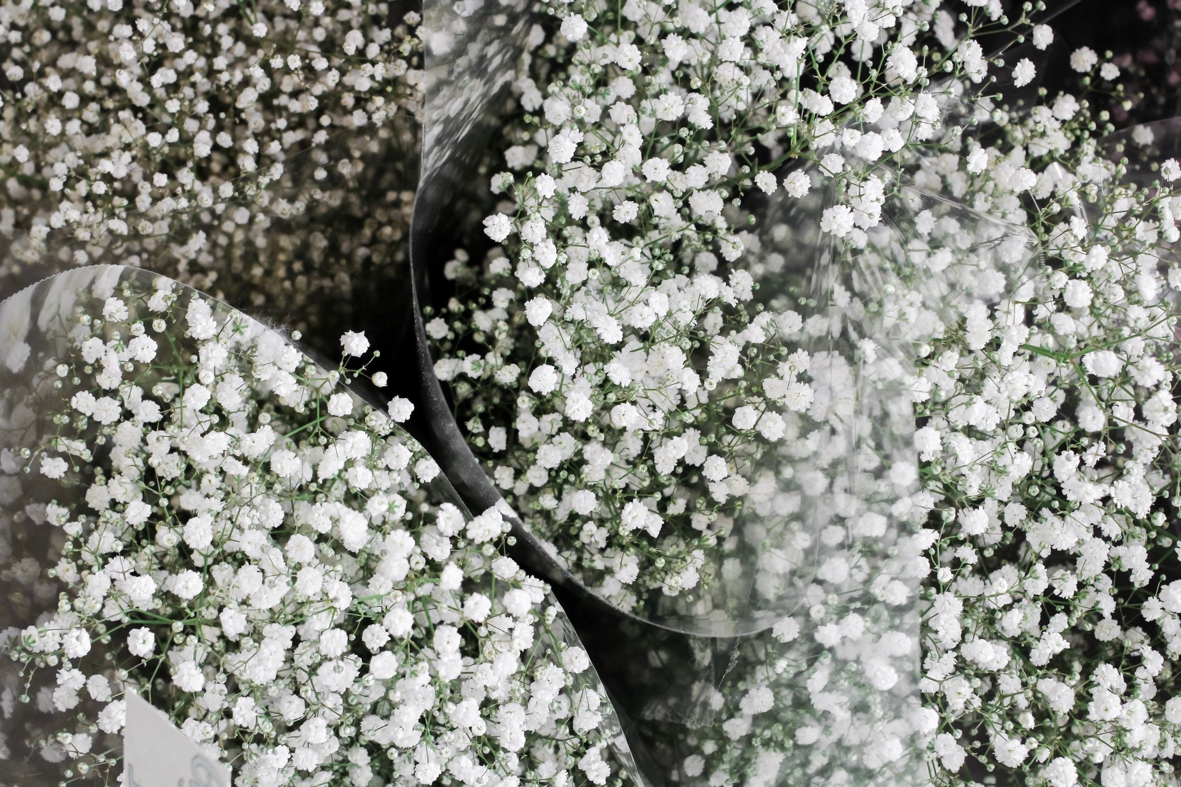 Baby Breath Wallpapers Top Free Baby Breath Backgrounds Wallpaperaccess