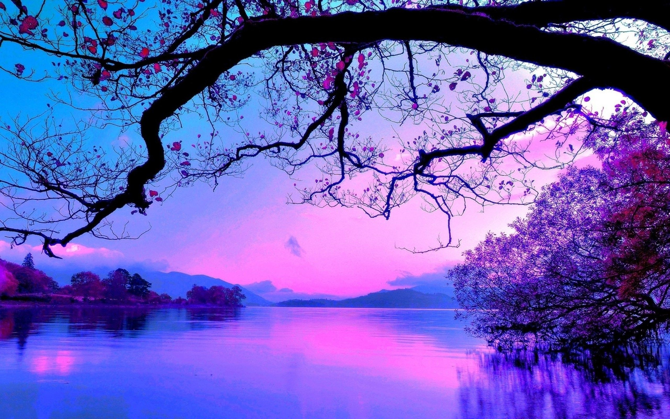 Purple Tree Wallpapers Top Free Purple Tree Backgrounds Wallpaperaccess