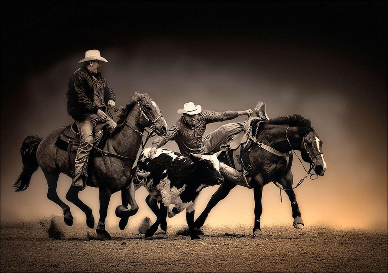 Rodeo 4k Wallpapers Top Free Rodeo 4k Backgrounds Wallpaperaccess