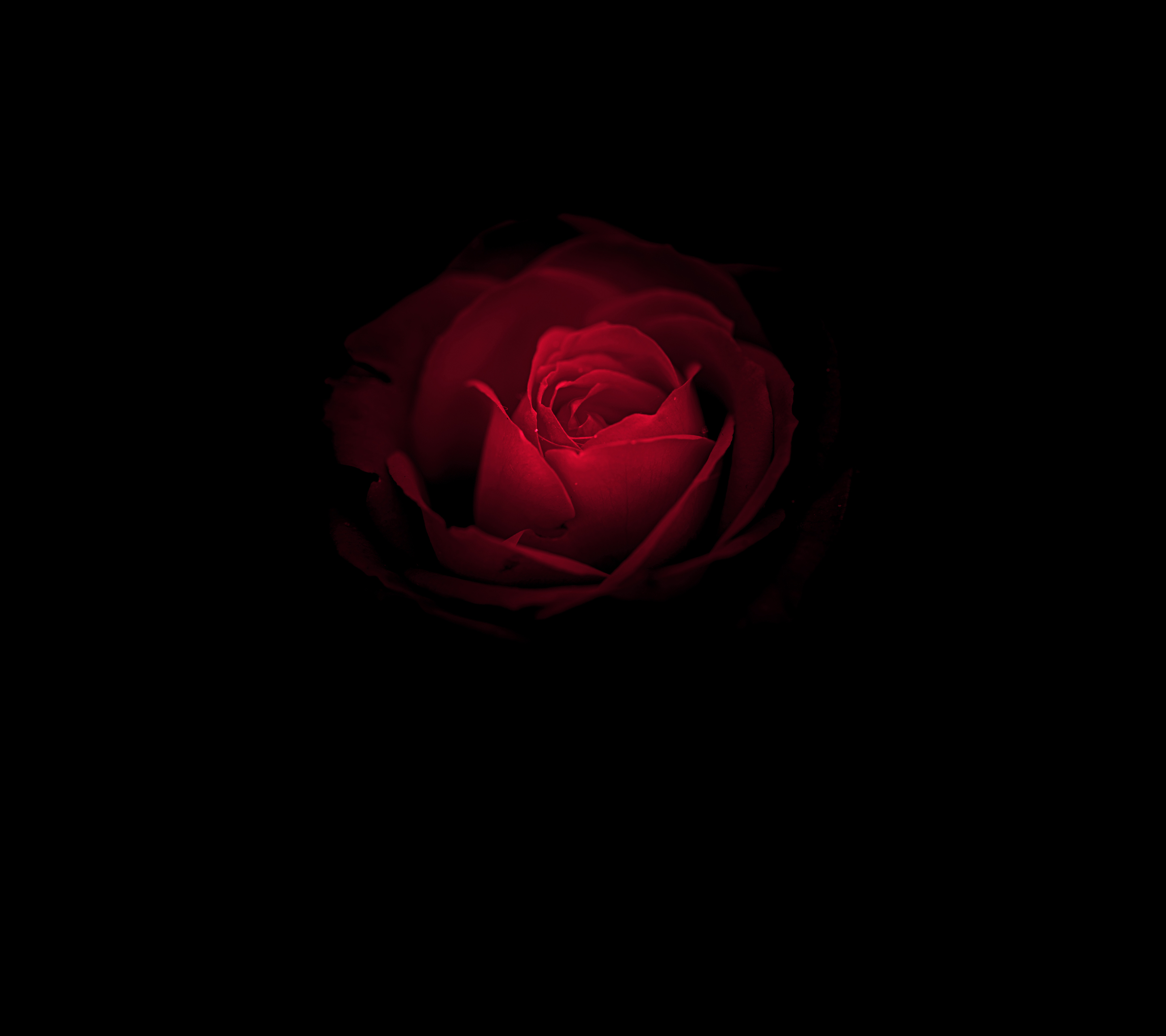 Black And Red Flower Wallpapers Top Free Black And Red Flower Backgrounds Wallpaperaccess