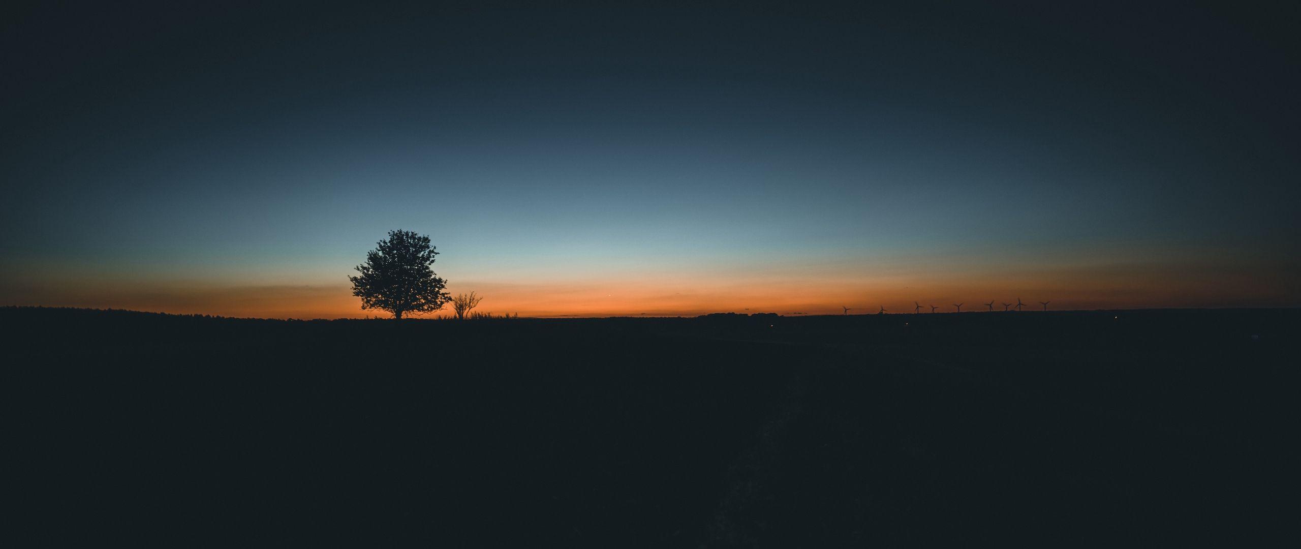 2560x1080 Download wallpaper 2560x1080 tree, horizon, minimalism, sunset