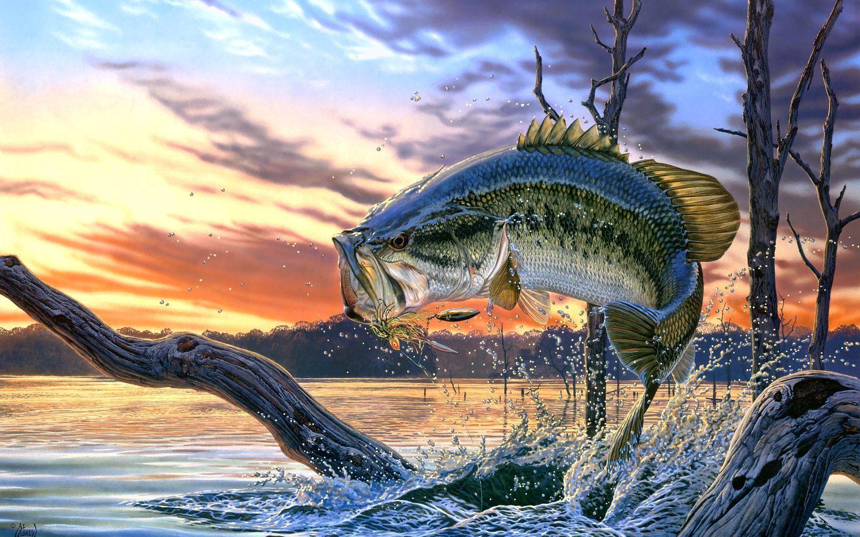 Fishing Desktop Wallpapers Top Free Fishing Desktop Backgrounds Wallpaperaccess