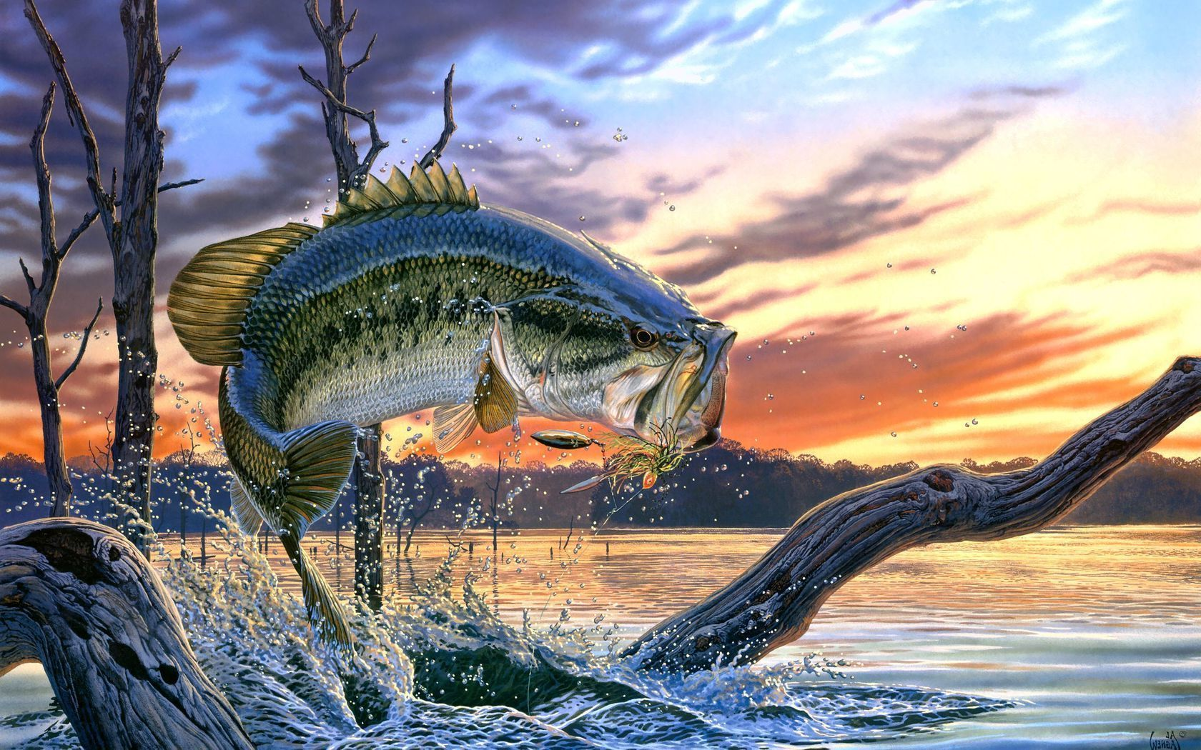 Fishing Desktop Wallpapers Top Free Fishing Desktop