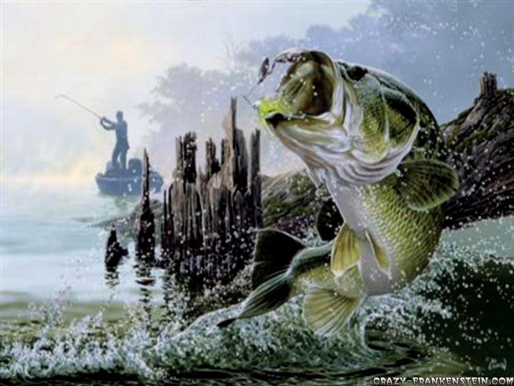 Bass Fishing Wallpapers Top Free Bass Fishing Backgrounds Wallpaperaccess