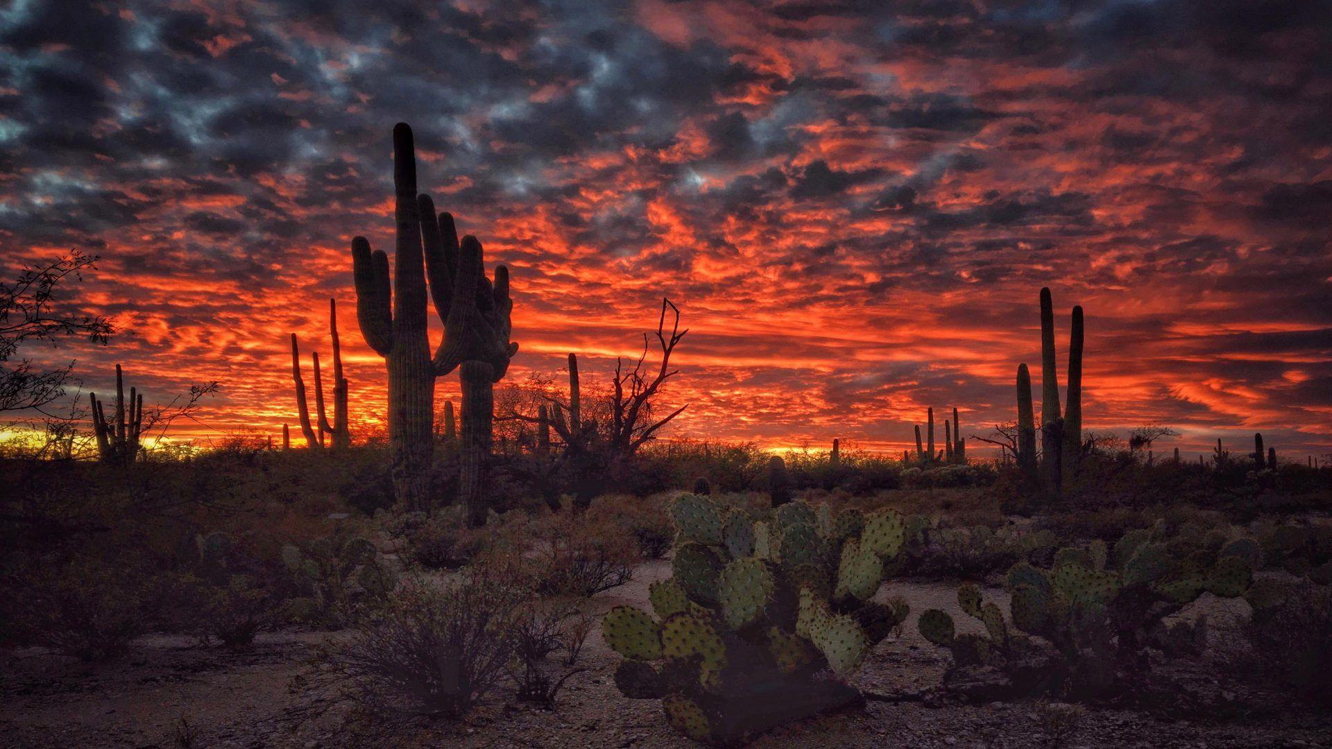Arizona Wallpapers Top Free Arizona Backgrounds