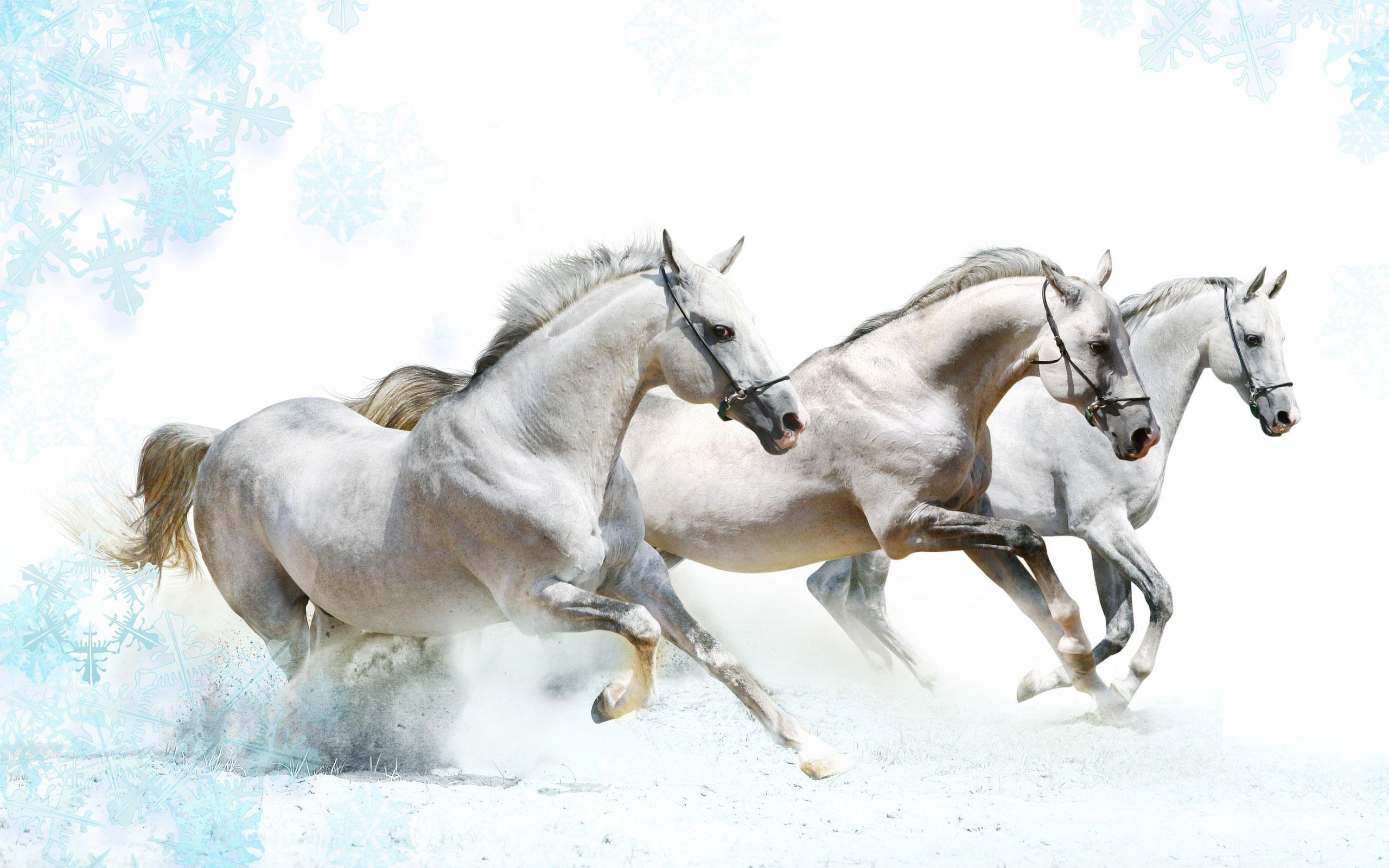 Samurai On Horseback Desktop Wallpapers Top Free Samurai On