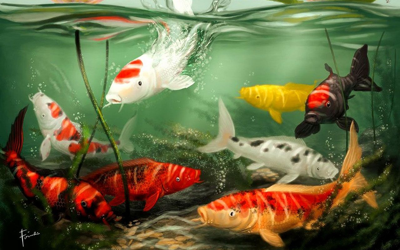 Animated Koi Fish Wallpapers Top Free Animated Koi Fish Backgrounds Wallpaperaccess