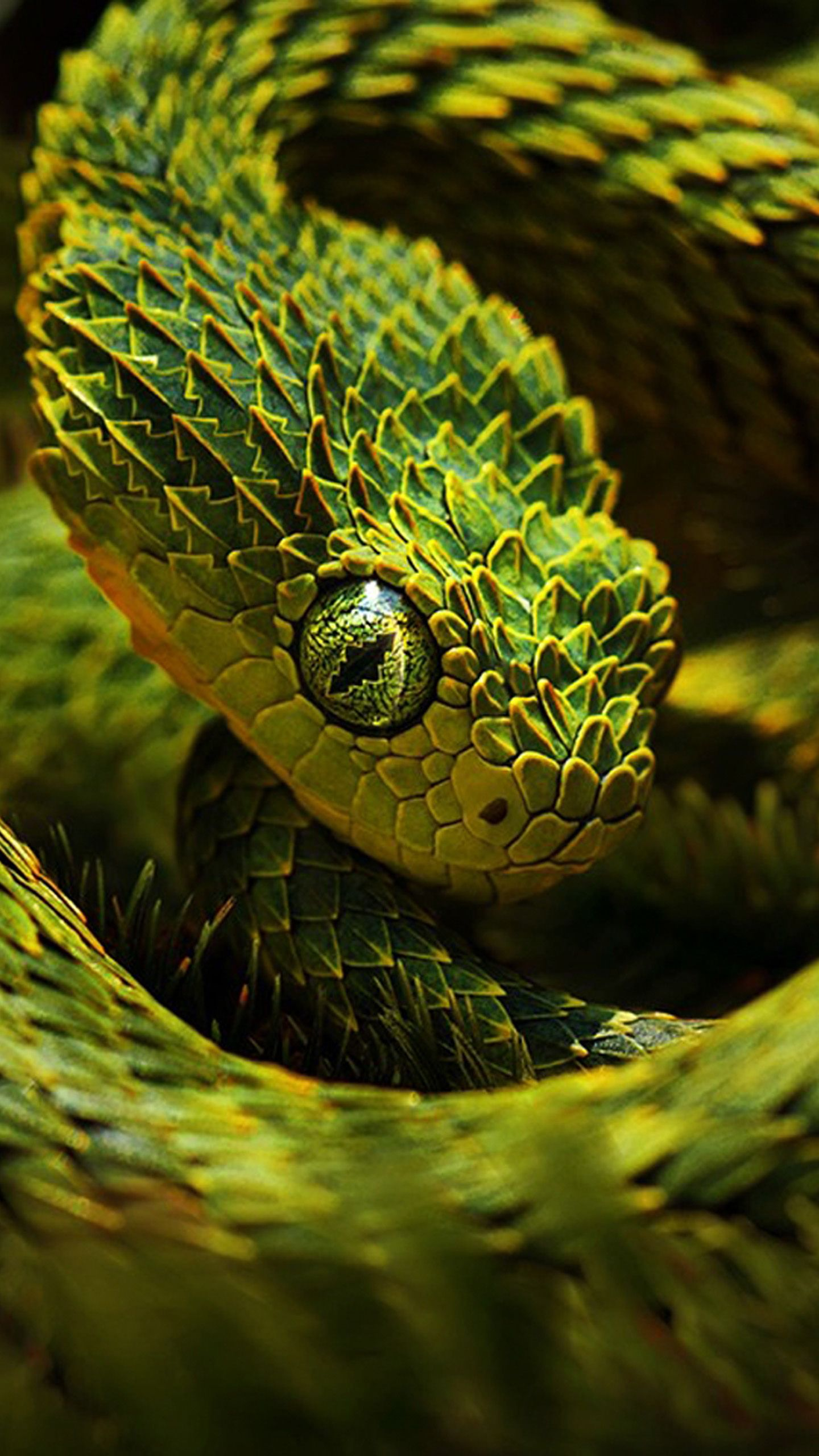 Snake Iphone Wallpapers Top Free Snake Iphone Backgrounds