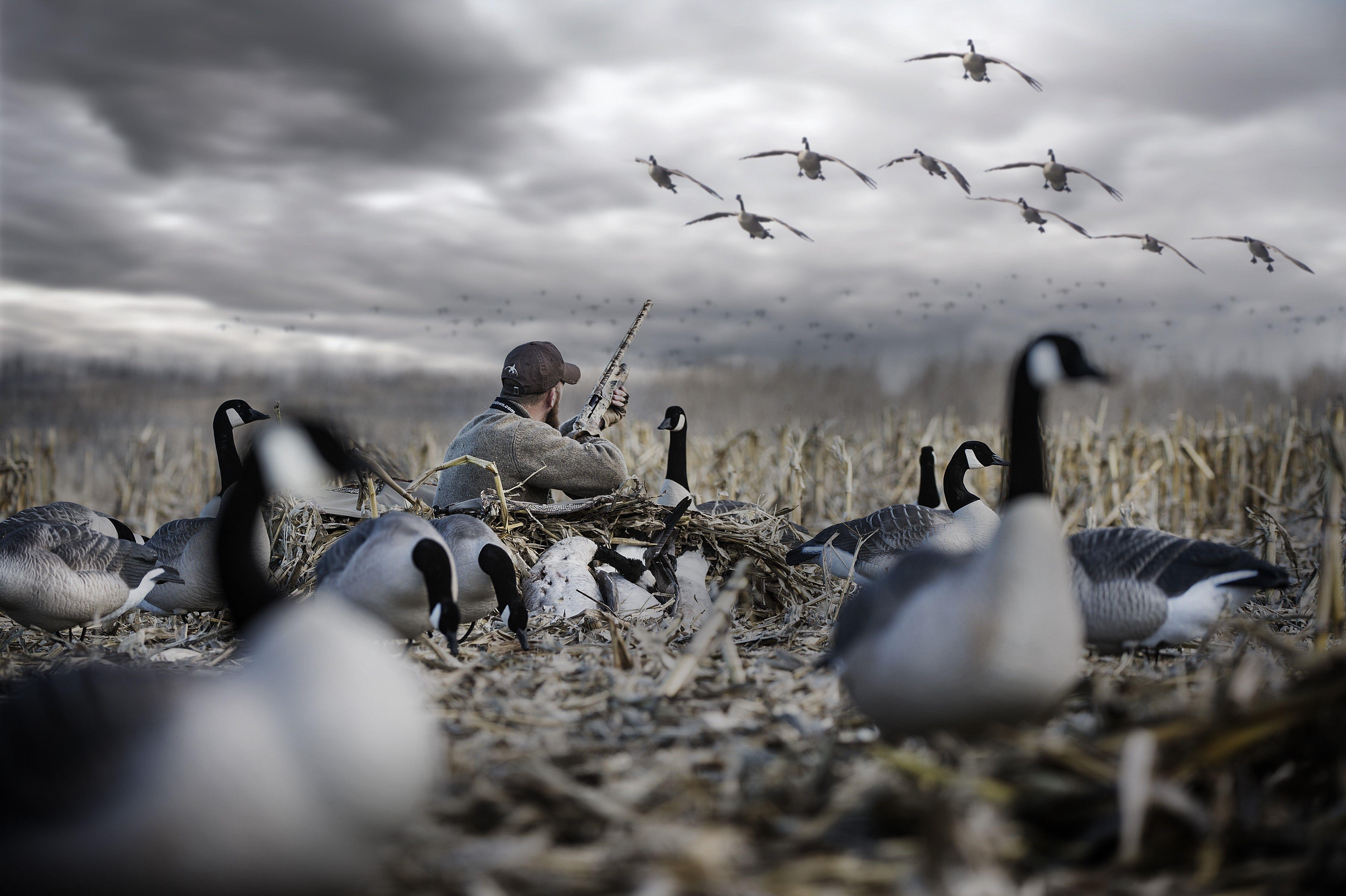 картинки охотники на птиц рабочий