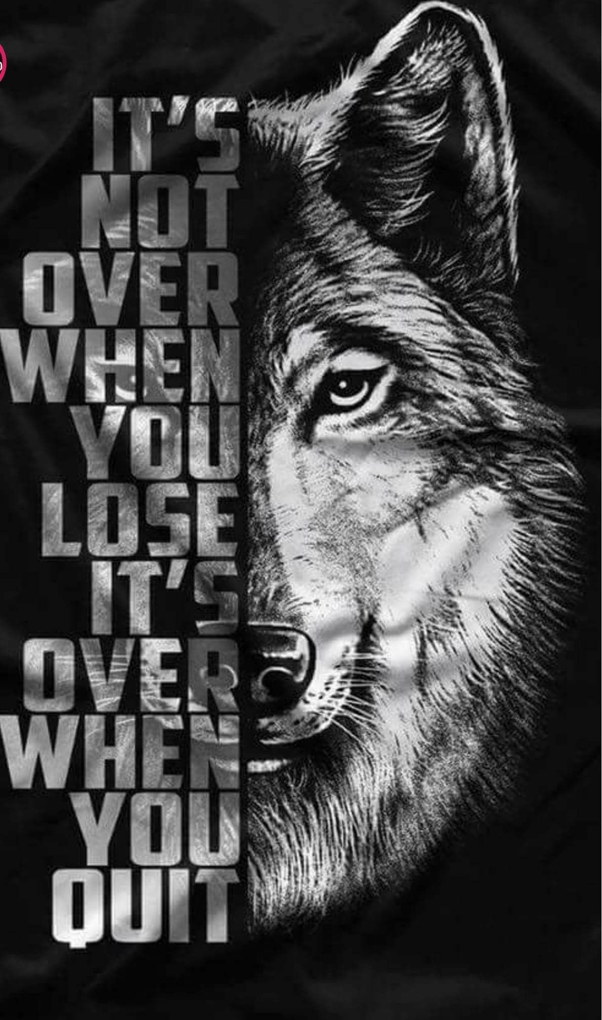 lone wolf biker wallpapers top free