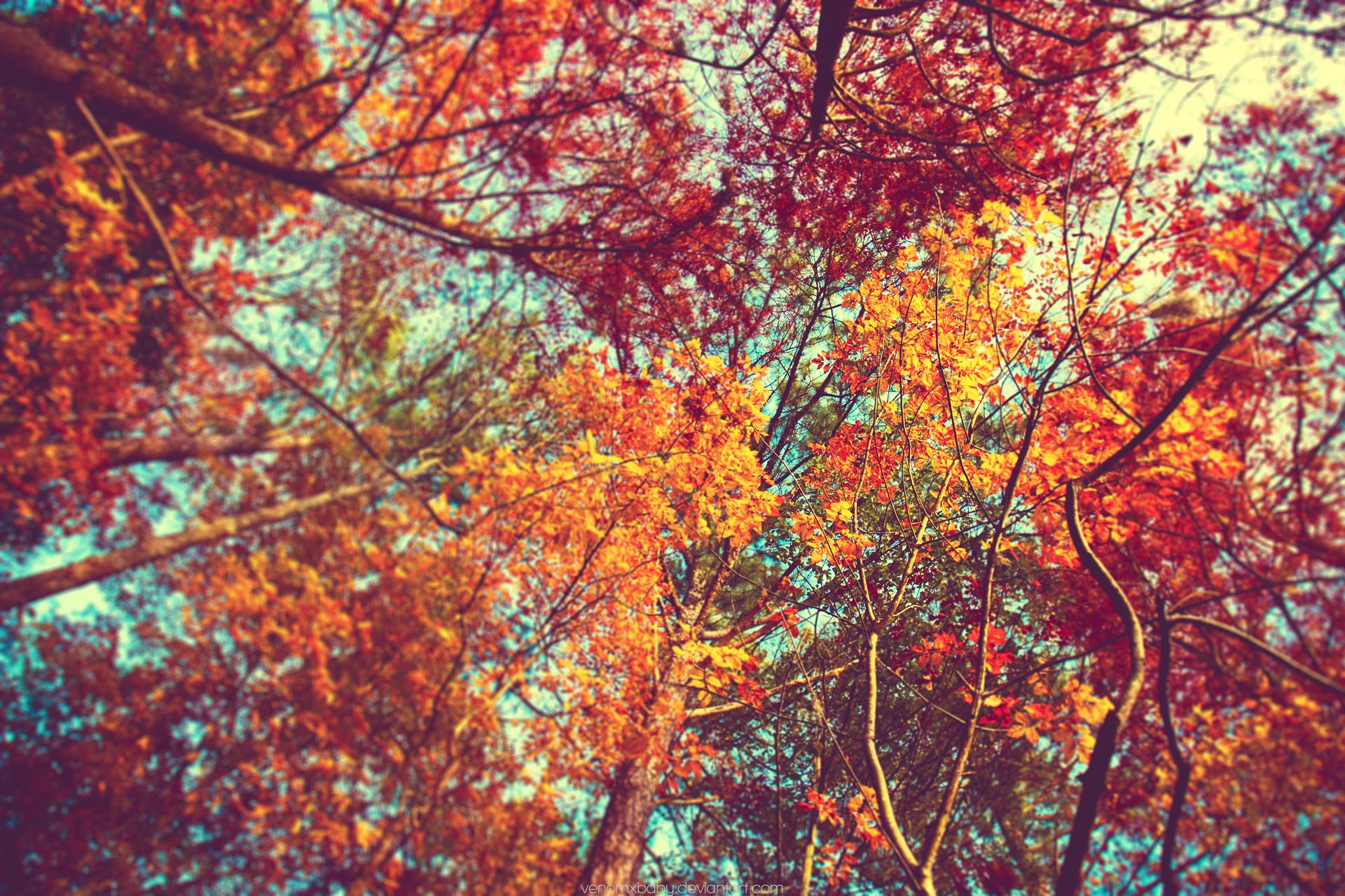 Cute Fall Wallpapers - Top Free Cute Fall Backgrounds ...