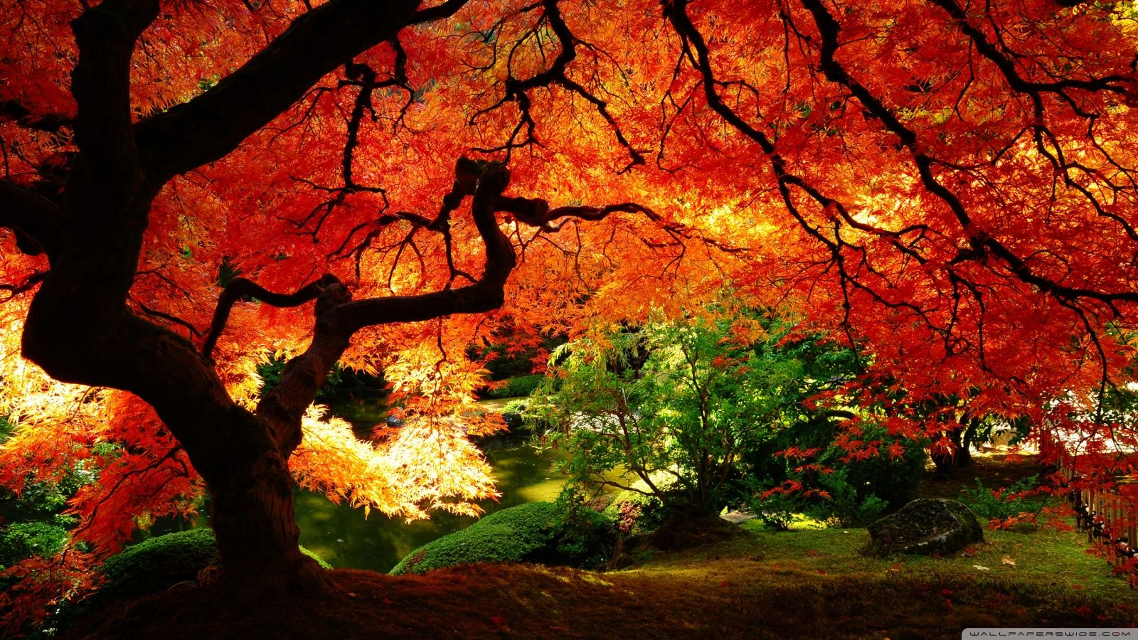 Japanese Autumn Desktop Wallpapers Top Free Japanese Autumn Desktop Backgrounds Wallpaperaccess