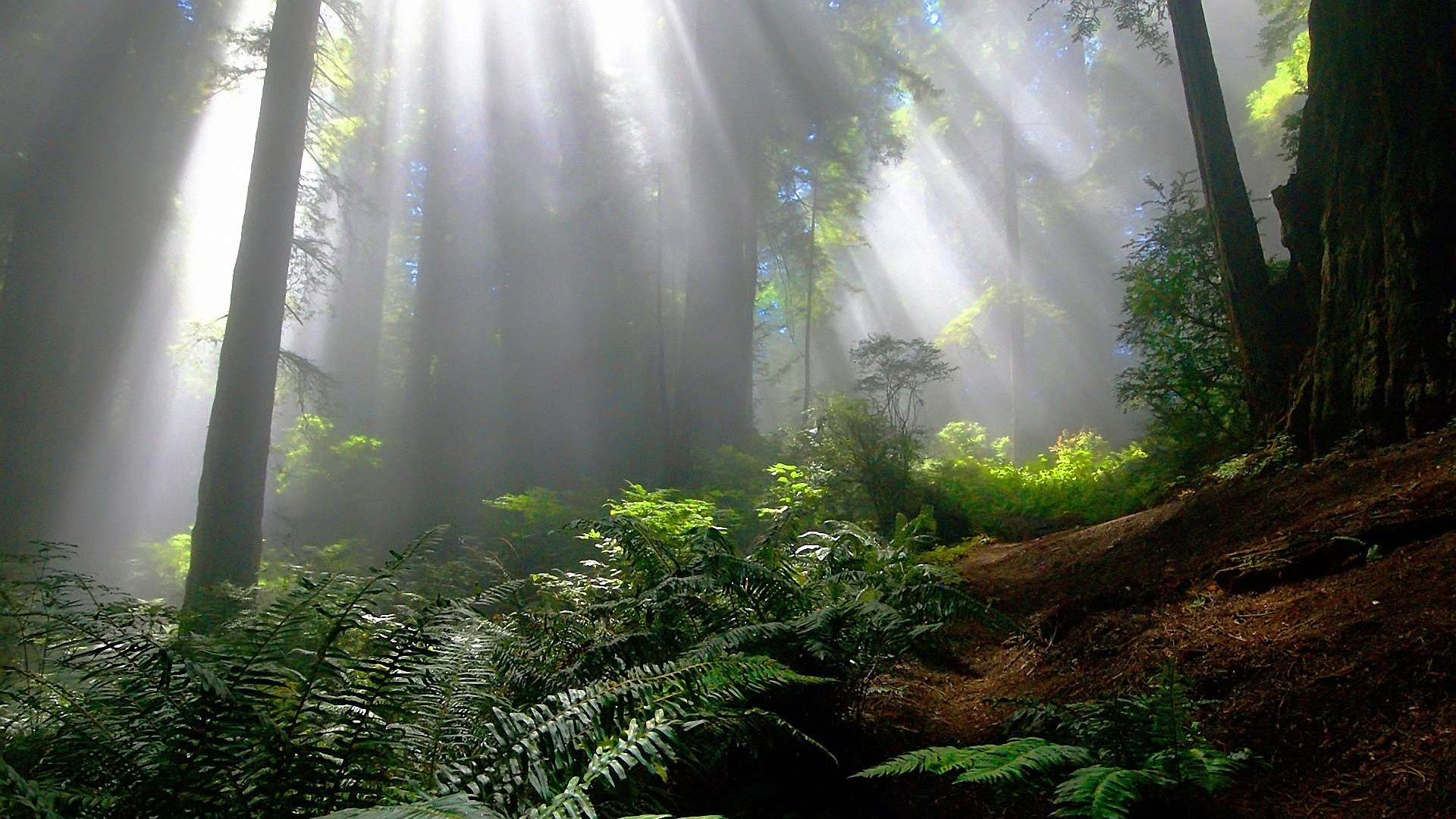 Magical Forest Wallpapers Top Free Magical Forest Backgrounds