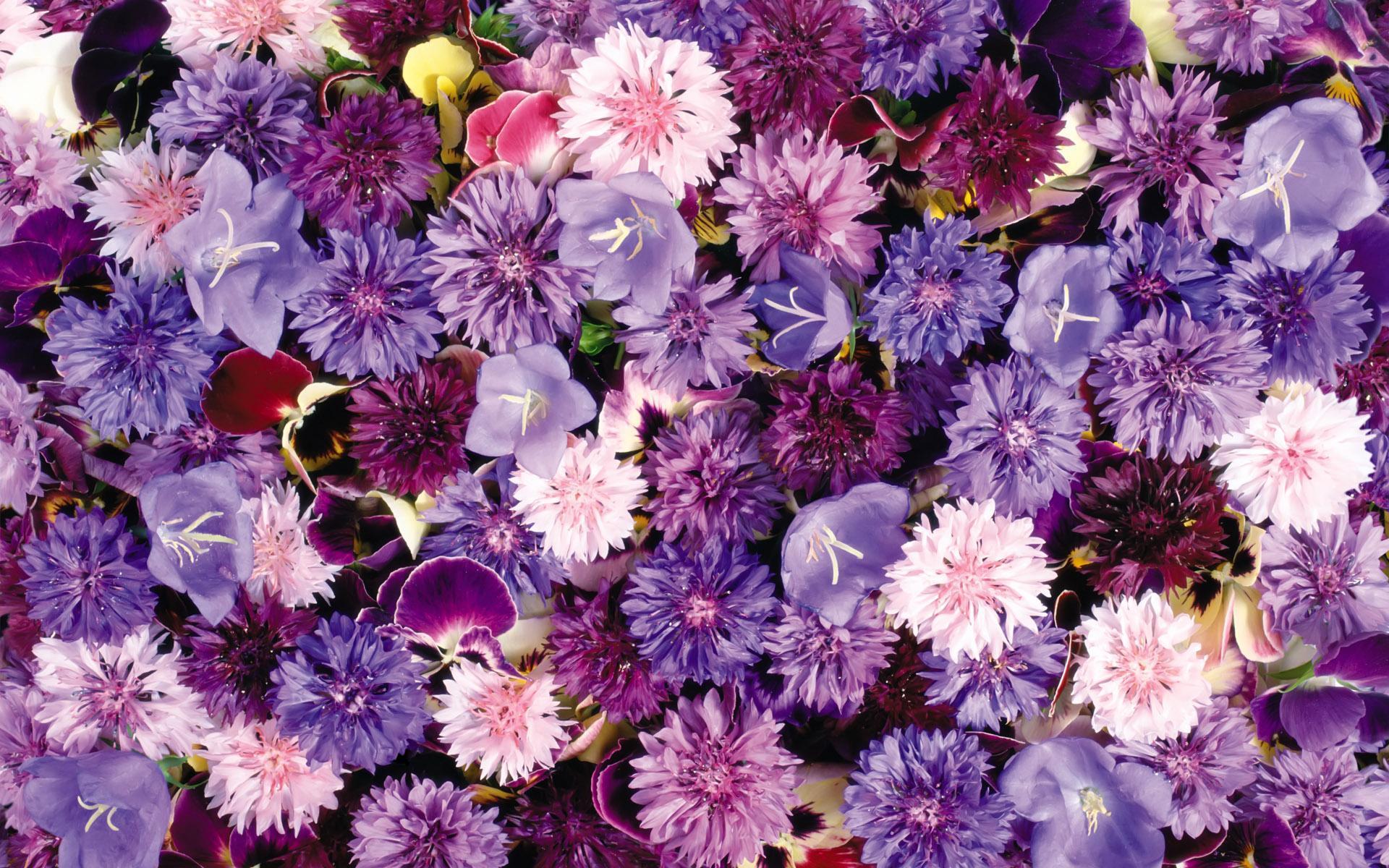 Purple Floral Wallpapers Top Free Purple Floral