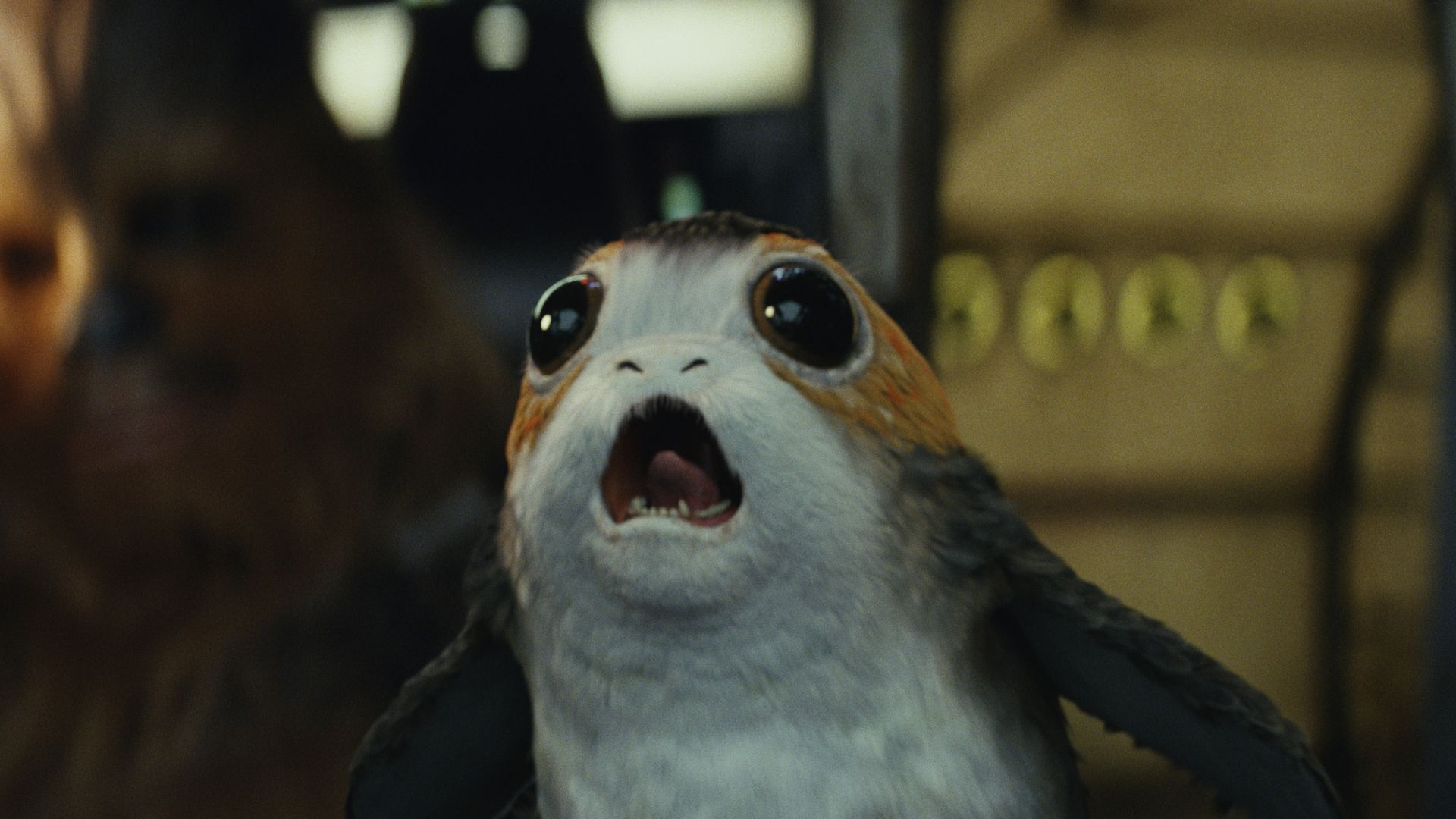 Porg Wallpapers Top Free Porg Backgrounds Wallpaperaccess