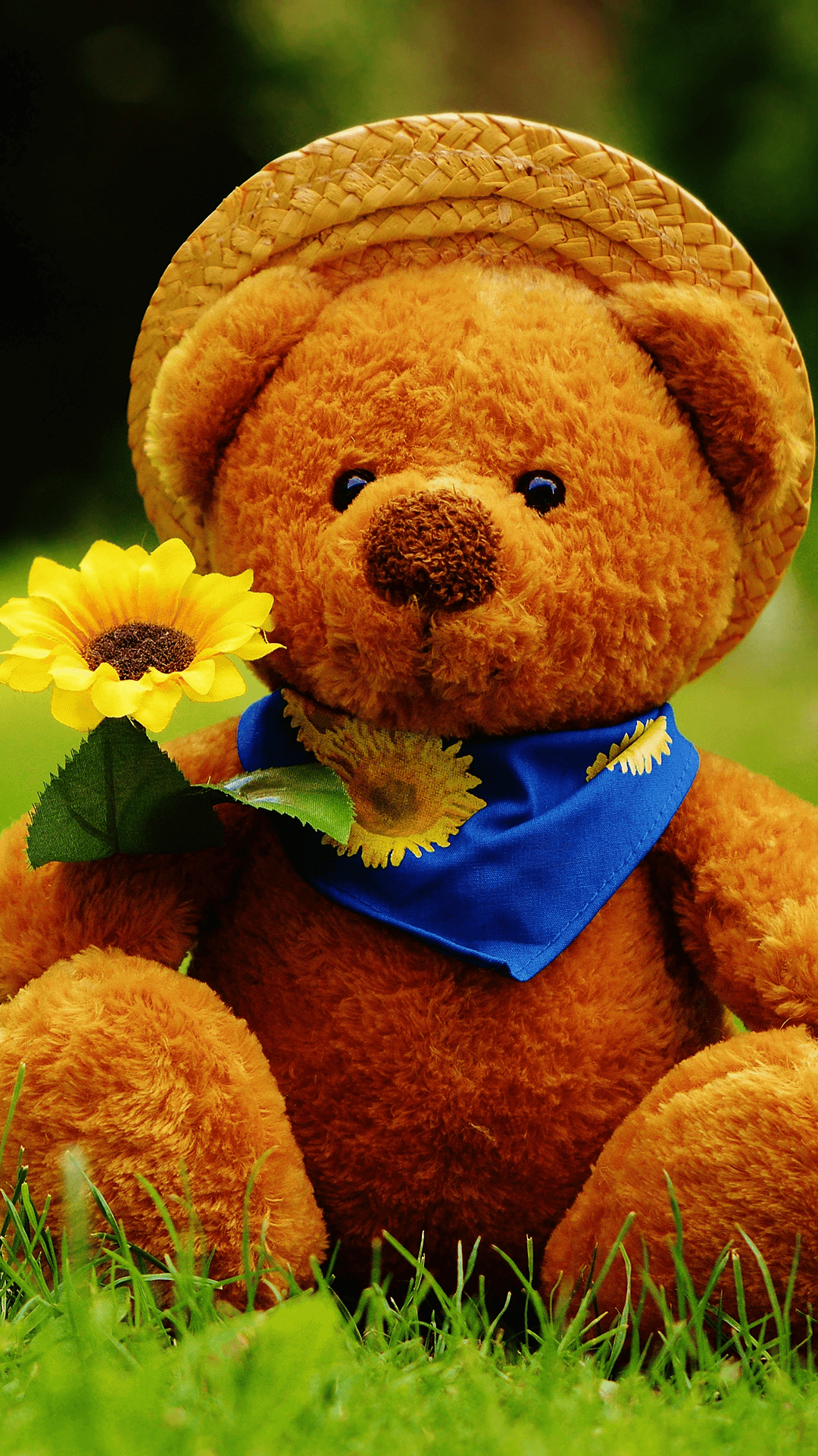 28 best free teddy bear iphone wallpapers wallpaperaccess 744x1392 izmirmasajfo