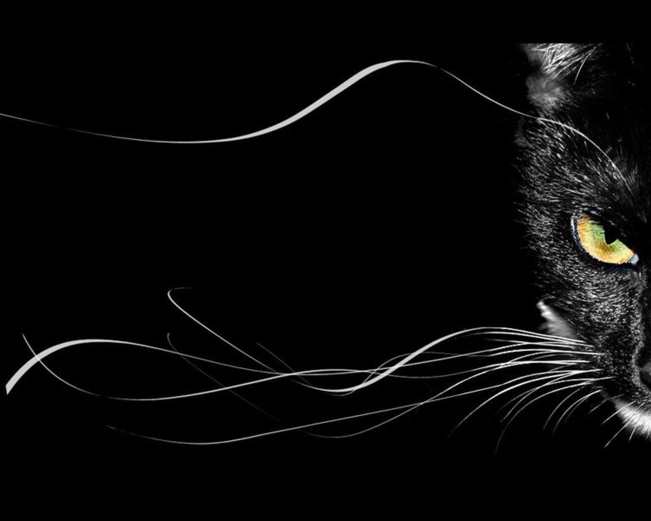 Black Cat Cartoon Wallpapers Top Free Black Cat Cartoon Backgrounds Wallpaperaccess