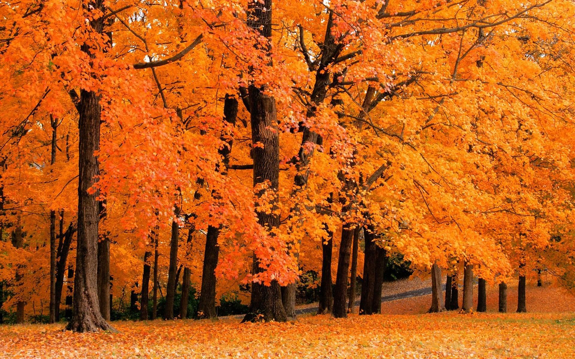 Fall Computer Wallpapers Top Free Fall Computer