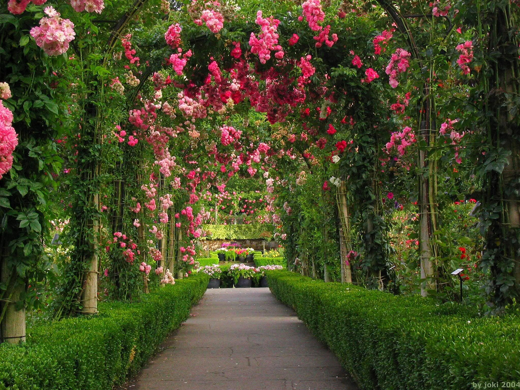 Rose Garden Wallpapers Top Free Backgrounds