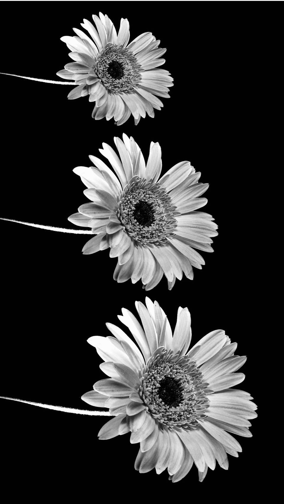 Aesthetic Black and White Wallpapers - Top Free Aesthetic ...