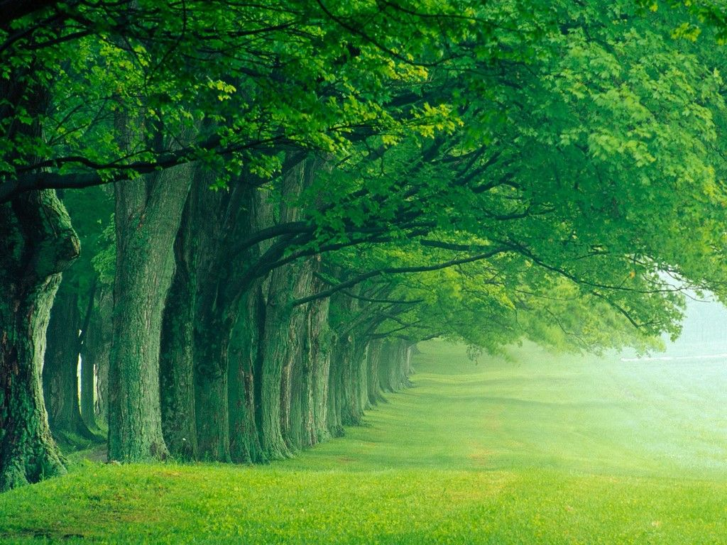3D Nature Wallpapers - Top Free 3D Nature Backgrounds
