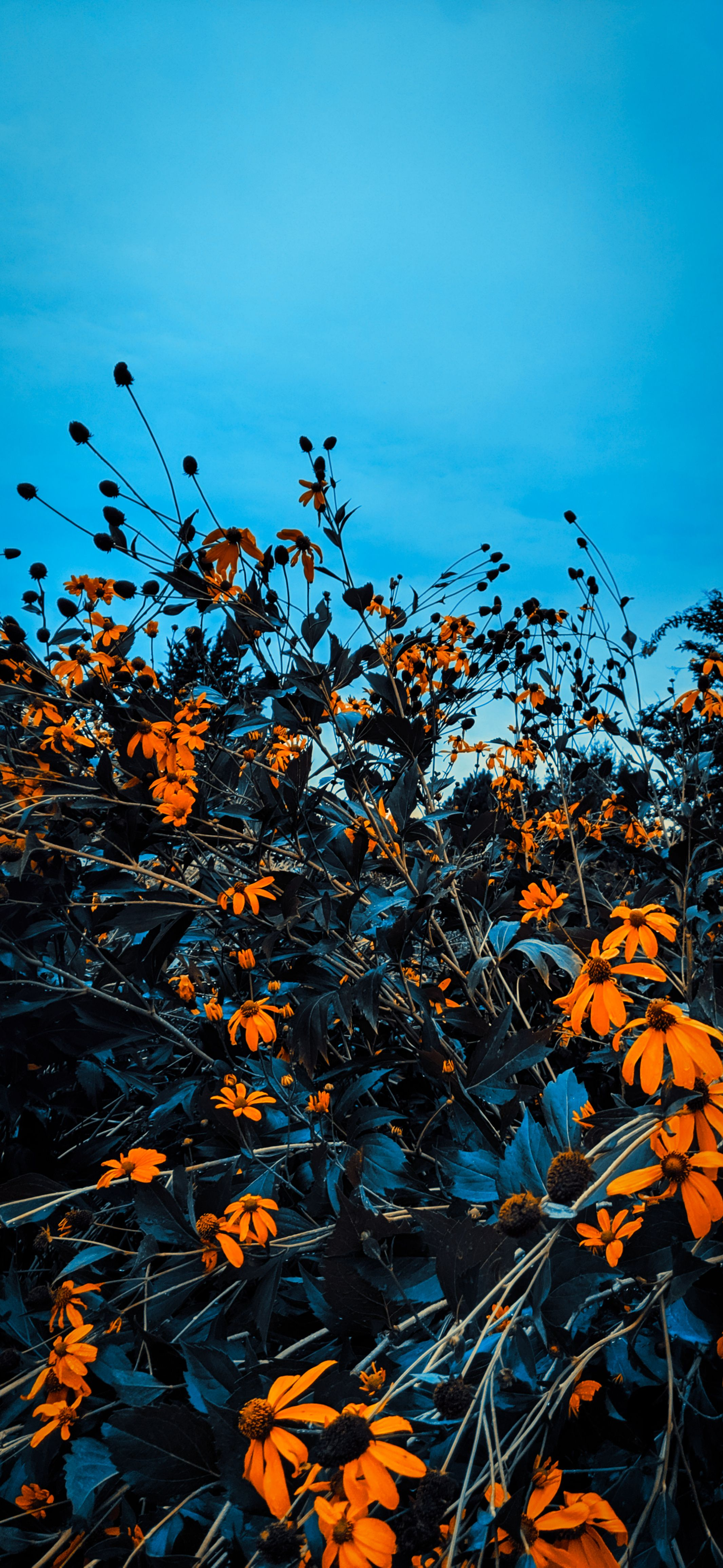 2131x4617 Hình nền lá mùa thu màu mùa thu cho iPhone