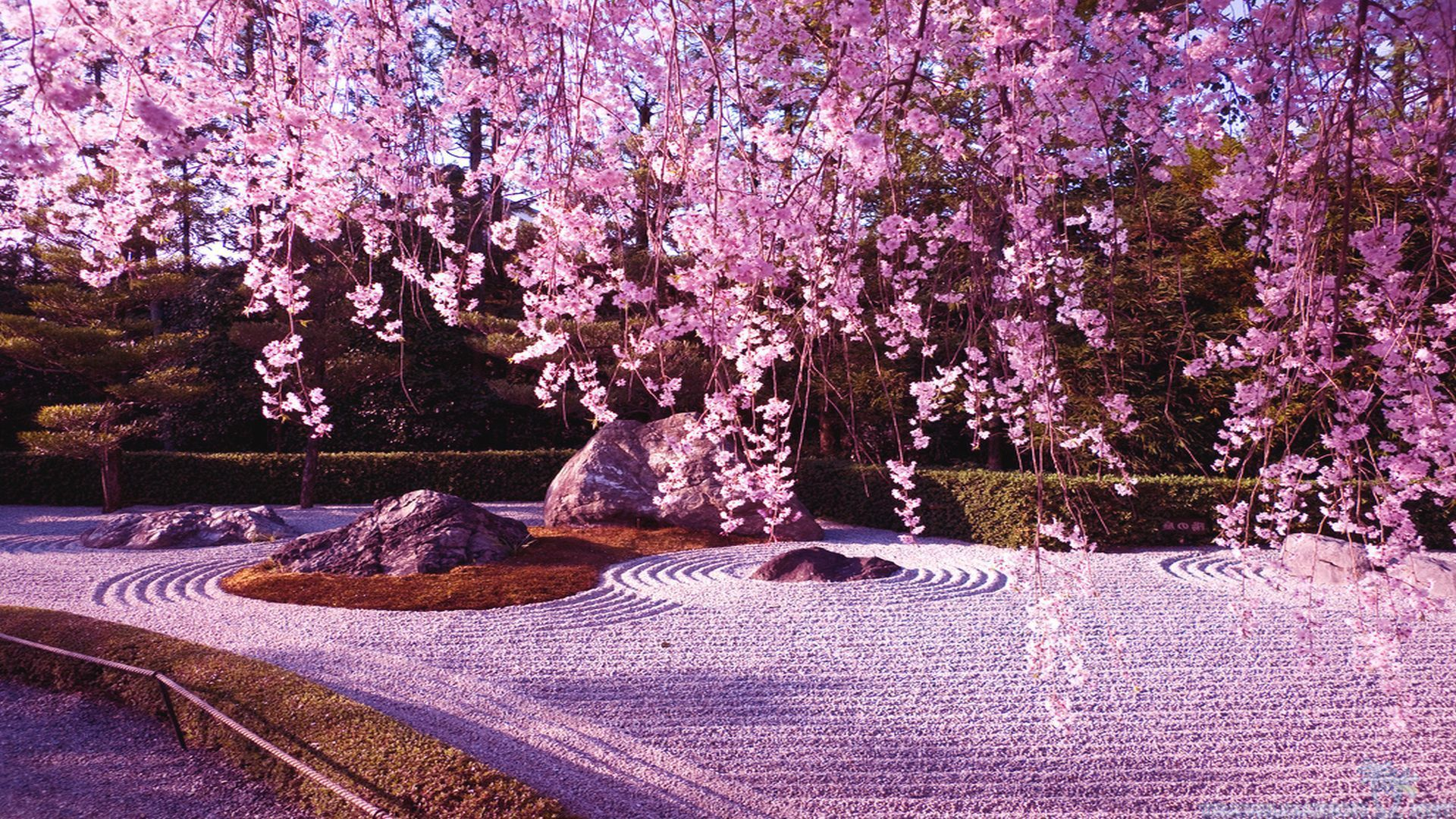 Japanese Garden Cherry Blossom Wallpapers Top Free Japanese Garden
