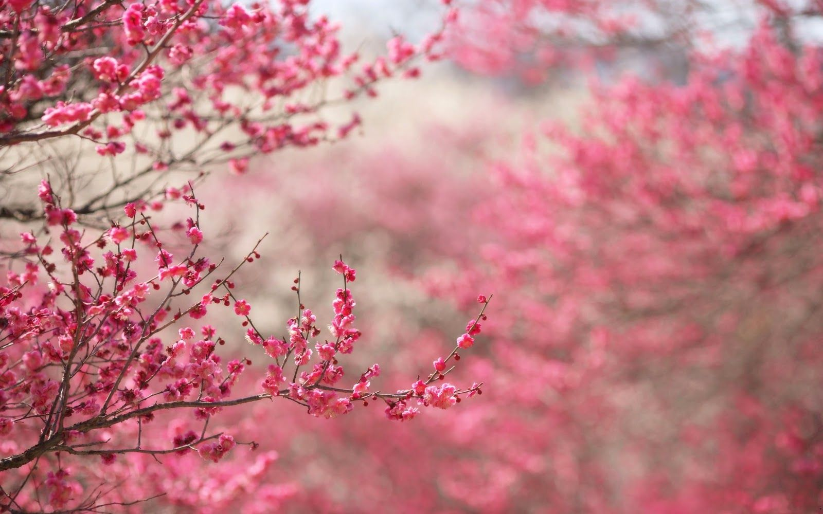 Japanese Flower Wallpaper