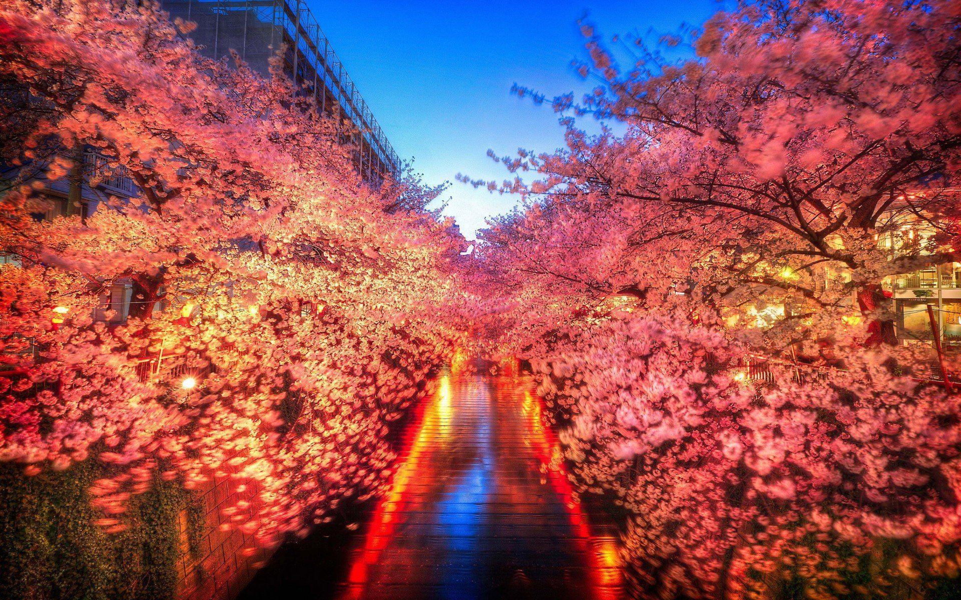 Tokyo Japan 4K Wallpapers - Top Free Tokyo Japan 4K ...