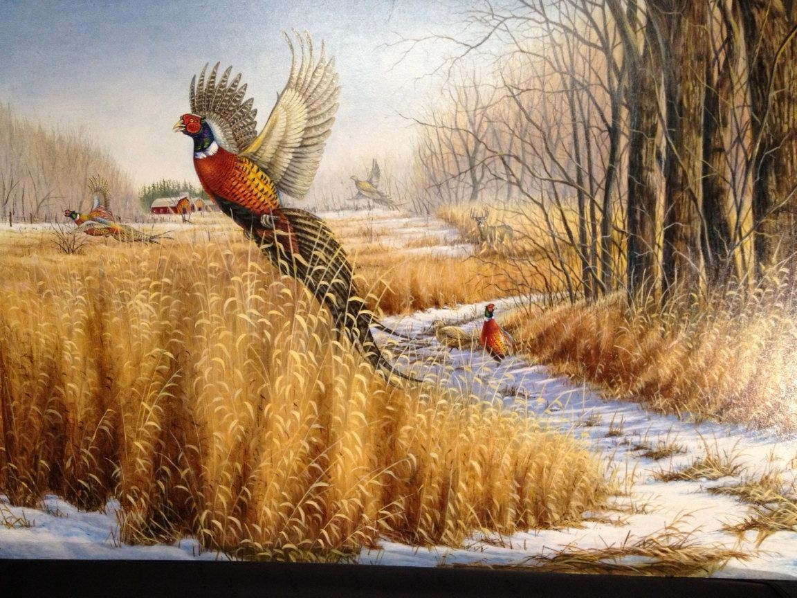Bird Hunting Wallpapers Top Free Bird Hunting Backgrounds