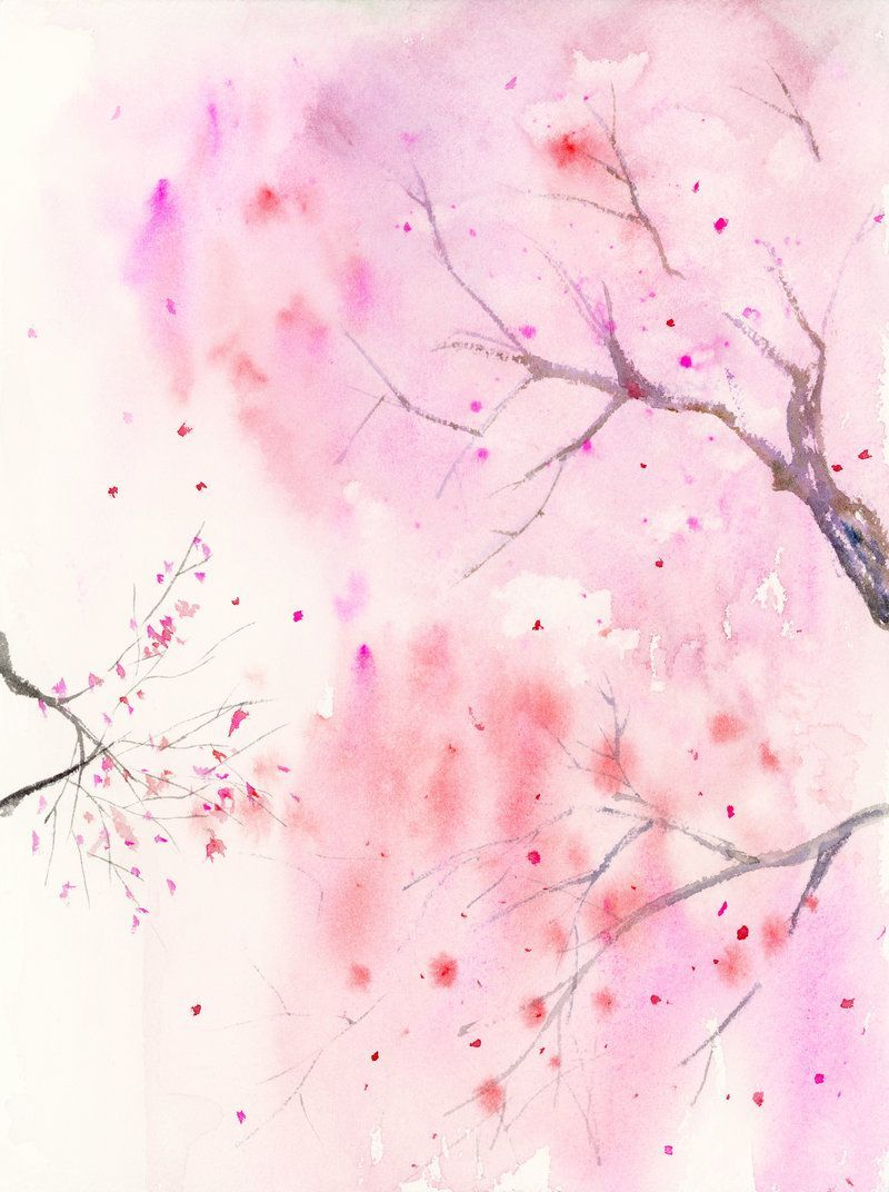 Watercolor Cherry Blossom Wallpapers Top Free Watercolor Cherry Blossom Backgrounds Wallpaperaccess
