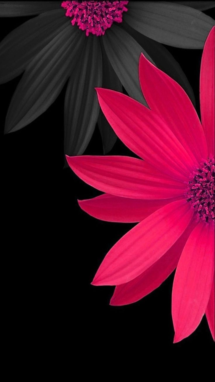 Black And Pink Flower Wallpapers Top Free Black And Pink Flower Backgrounds Wallpaperaccess