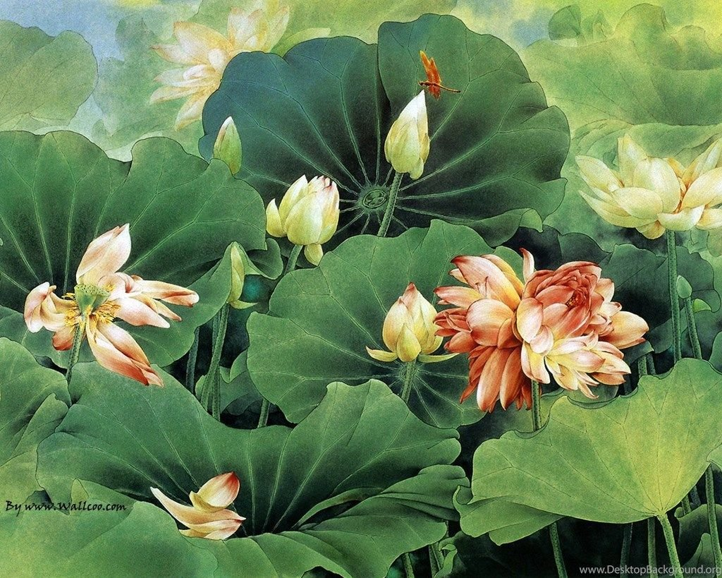 37 Best Free Chinese Lotus Wallpapers Wallpaperaccess