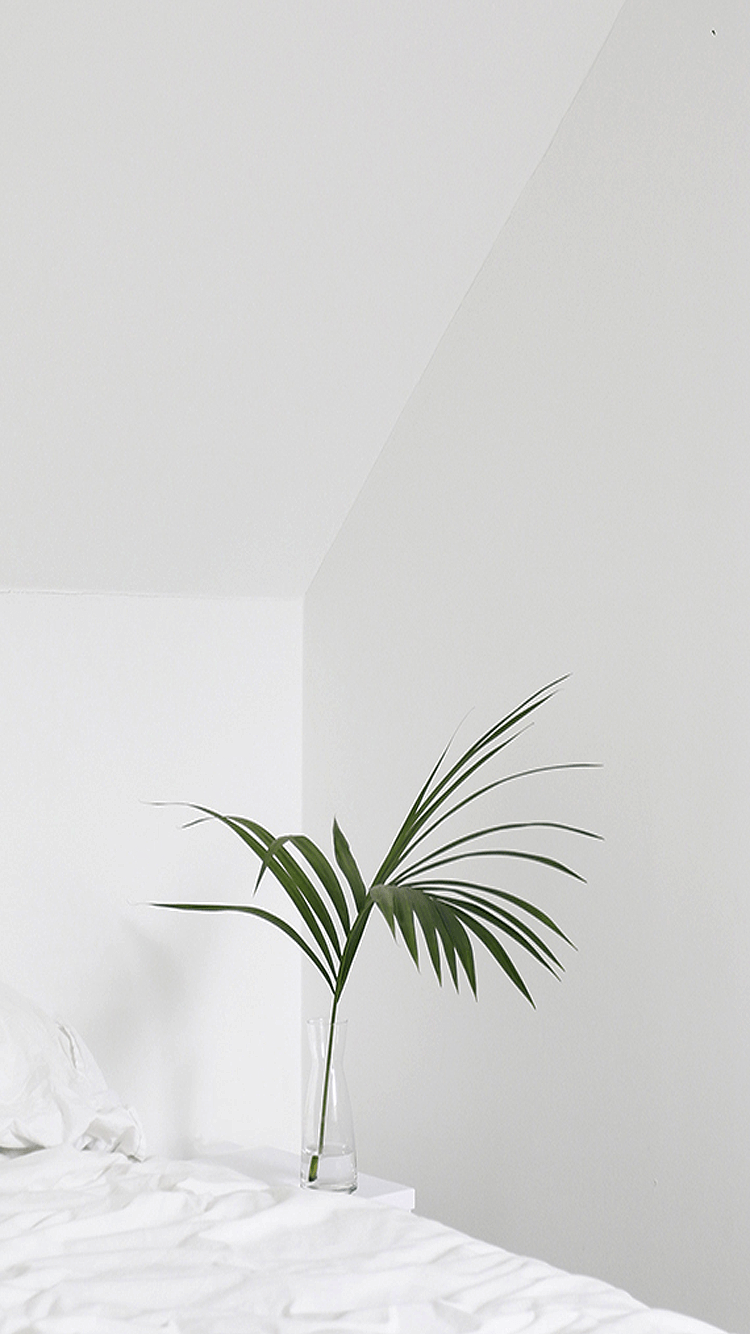White Aesthetic Plants Wallpapers Top Free White Aesthetic