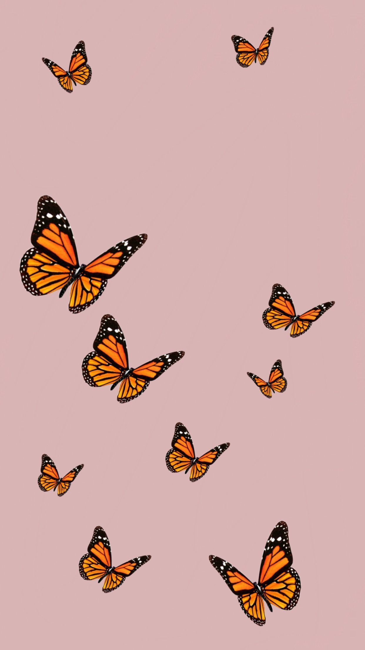Cute Butterfly Wallpapers - Top Free Cute Butterfly ...