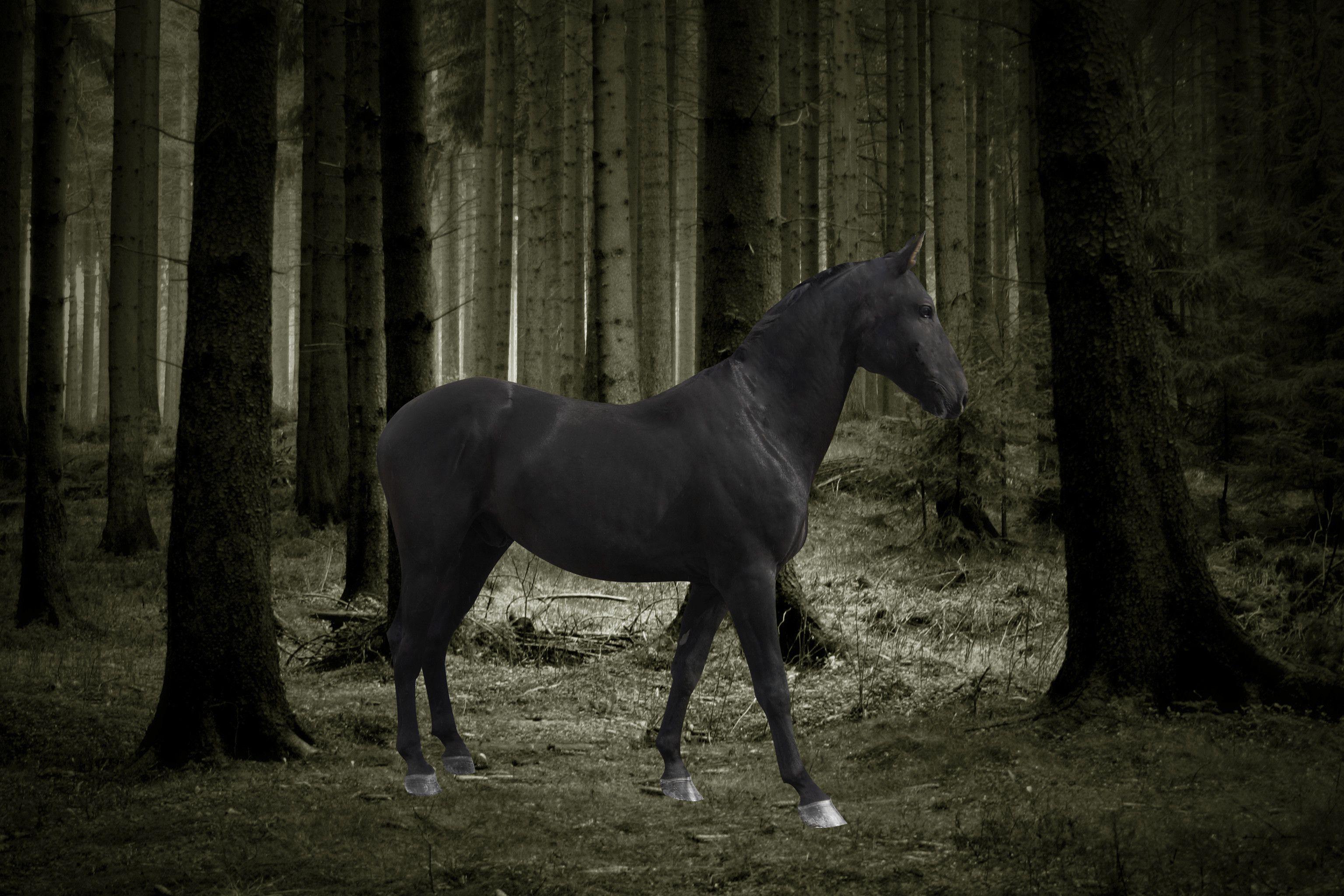 Dark Horse Wallpapers Top Free Dark Horse Backgrounds Wallpaperaccess