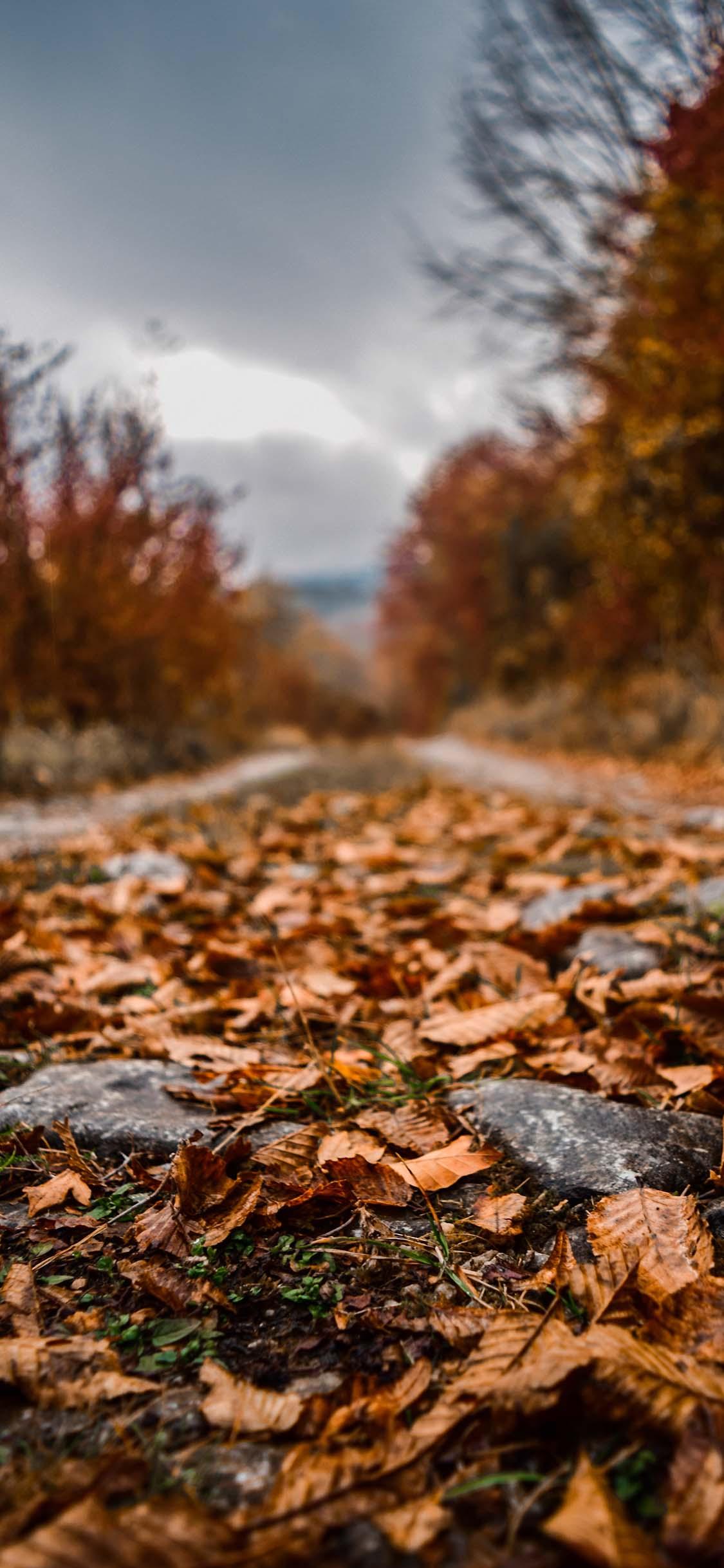 Hình nền mùa thu 1125x2436 cho iPhone - Tải xuống MIỄN PHÍ Hình nền mùa thu đẹp nhất