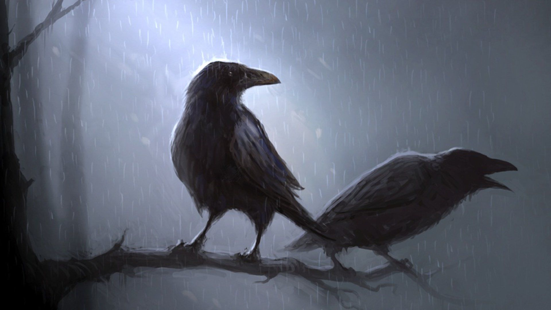 3d Crow Wallpapers Top Free 3d Crow Backgrounds Wallpaperaccess