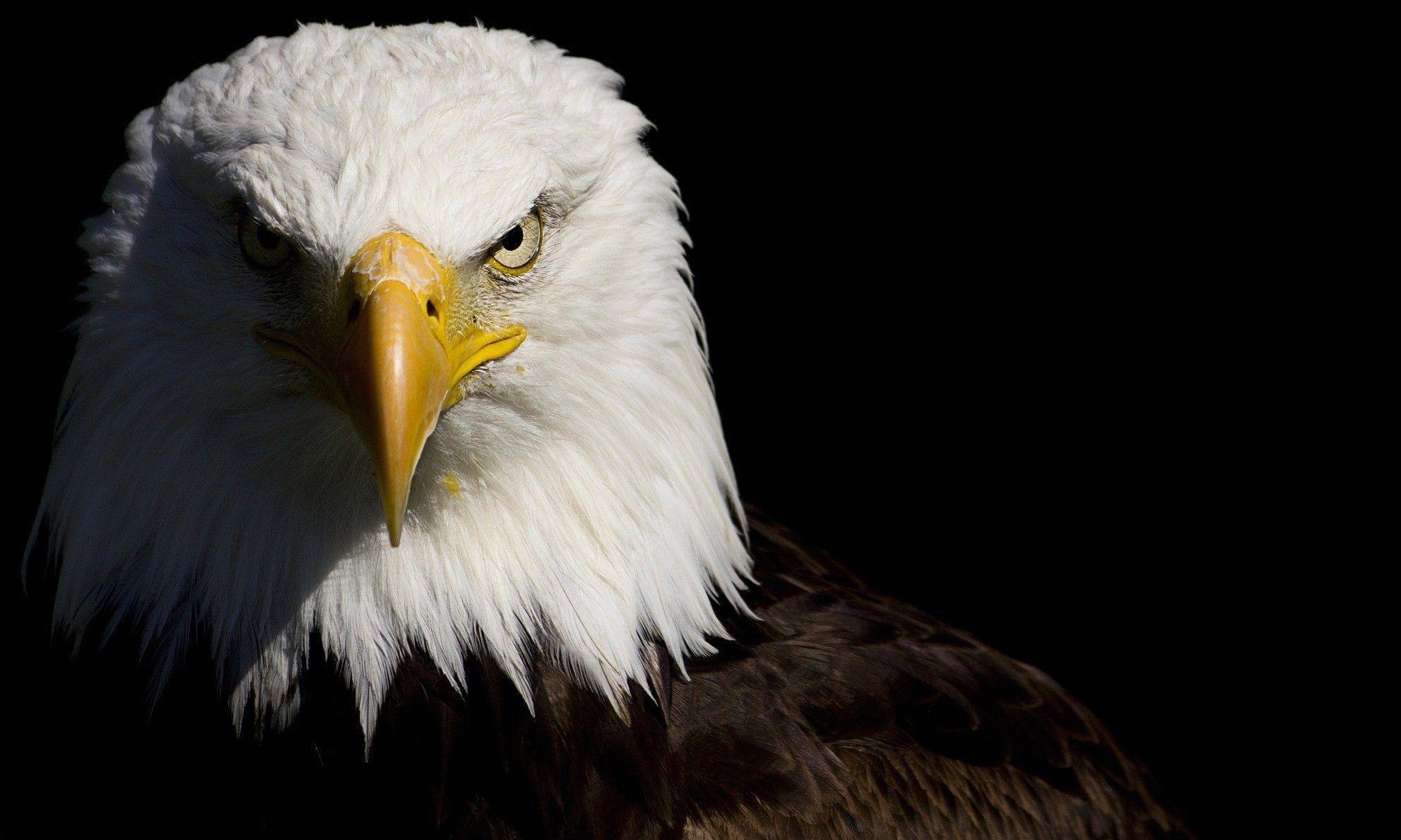 Eagle HD Desktop Wallpapers - Top Free Eagle HD Desktop ...