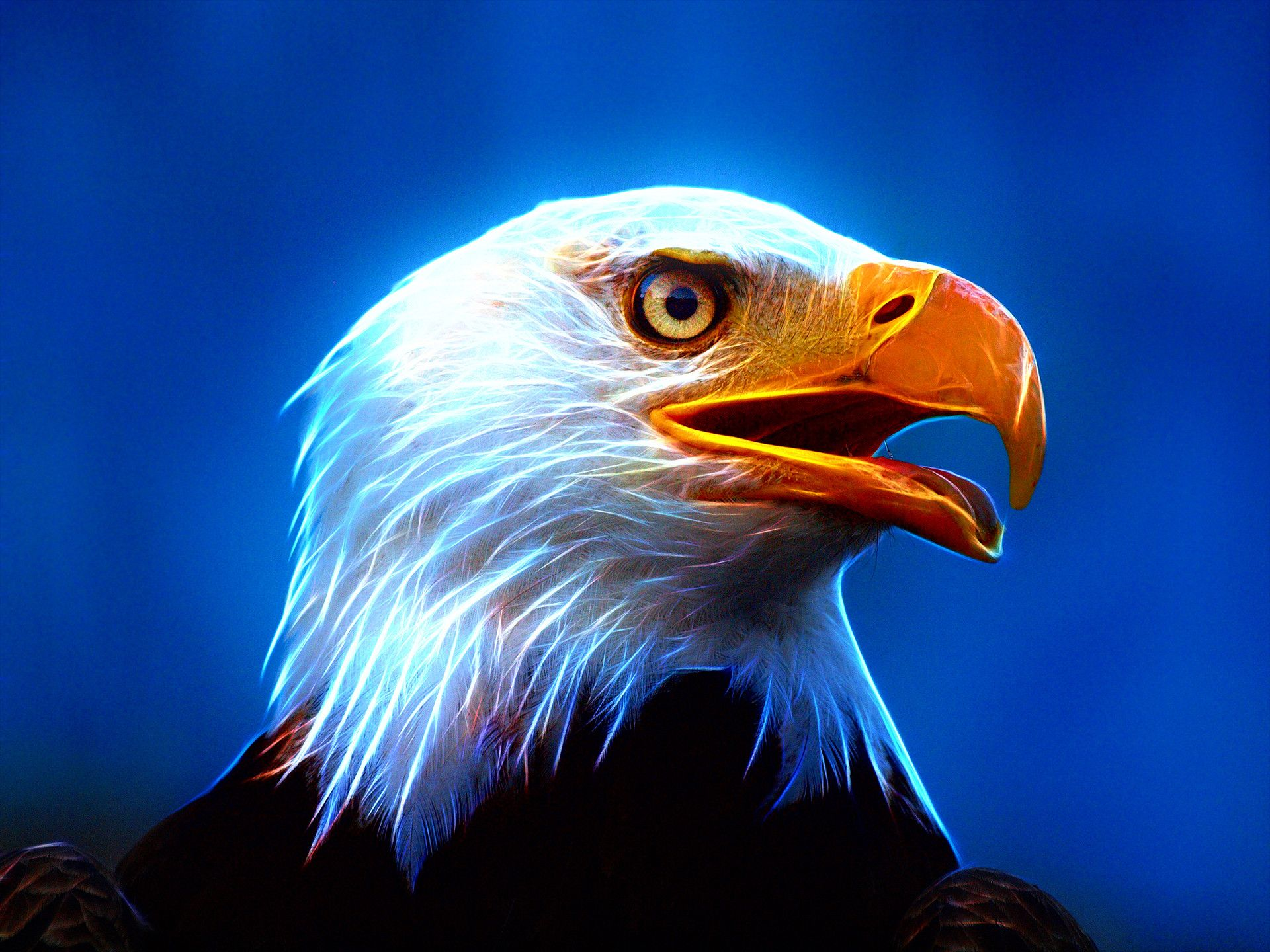 Neon Eagle Wallpapers - Top Free Neon Eagle Backgrounds ...