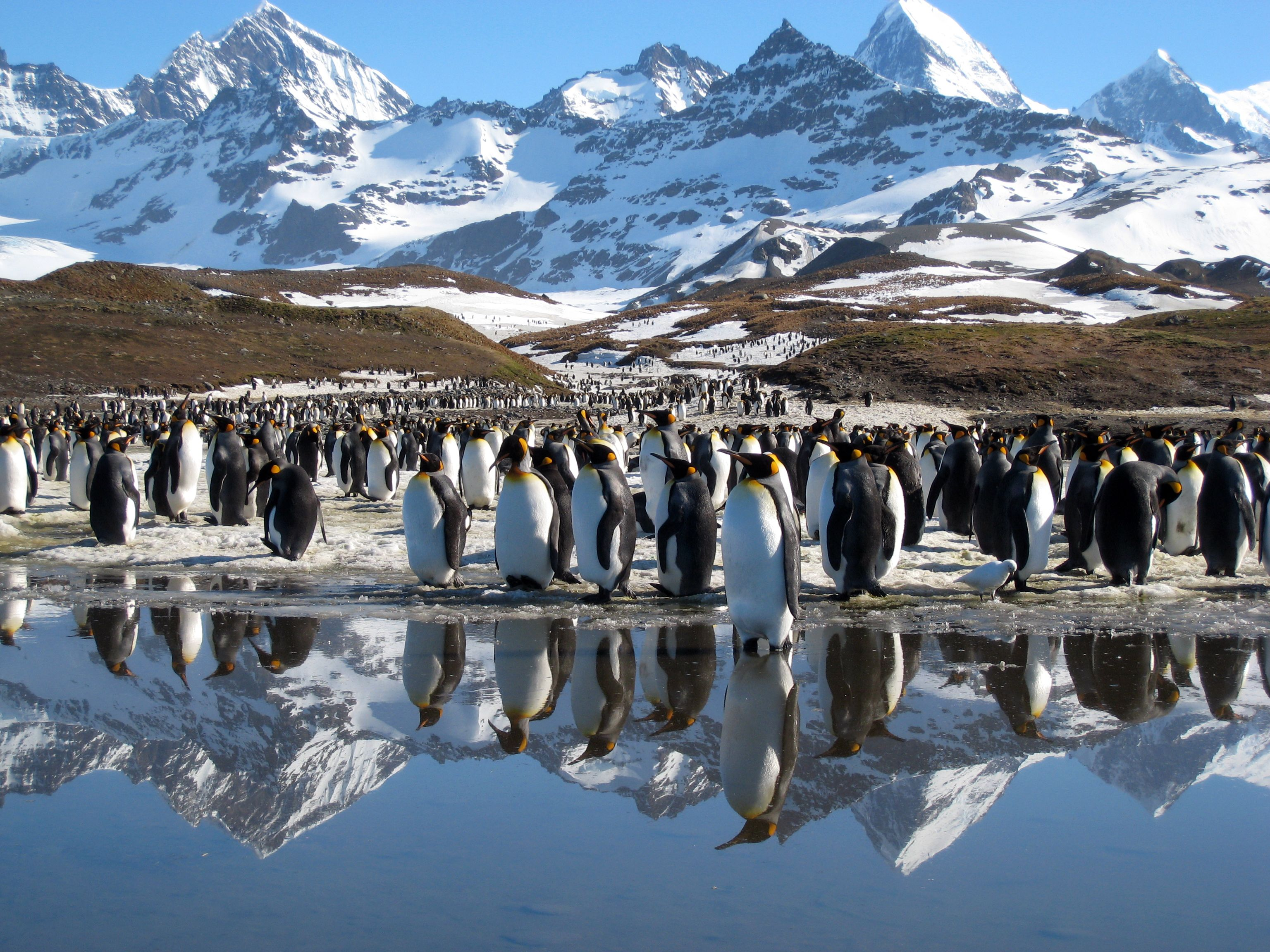 68 Best Free Discovery Channel Planet Earth Wallpapers Wallpaperaccess